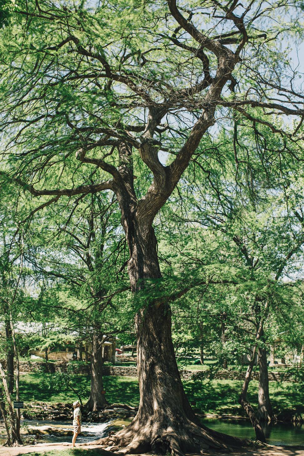 CindyGiovagnoli_Texas_Wimberly_Gruene_Cypress_Creek_HillCountry_outdoors-001.jpg