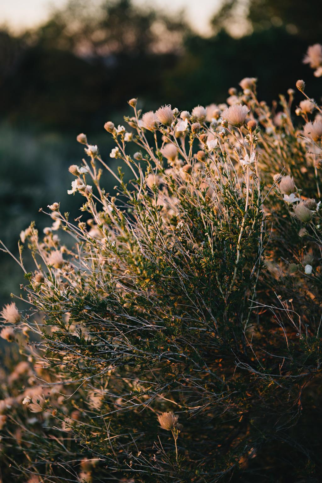 CindyGiovagnoli_Marfa_Texas_GuadalupeMountainsNationalPark_CarlsbadCavern_morning_hike-026.jpg