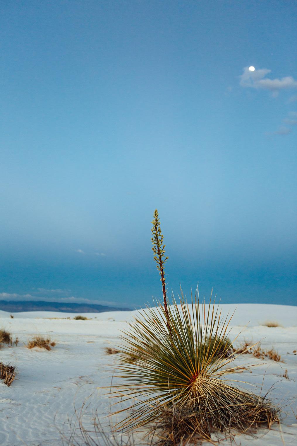 CindyGiovagnoli_WhiteSandsNationalMonument_NewMexico_Alamogordo_sunset_running_picnic_shelter-024.jpg