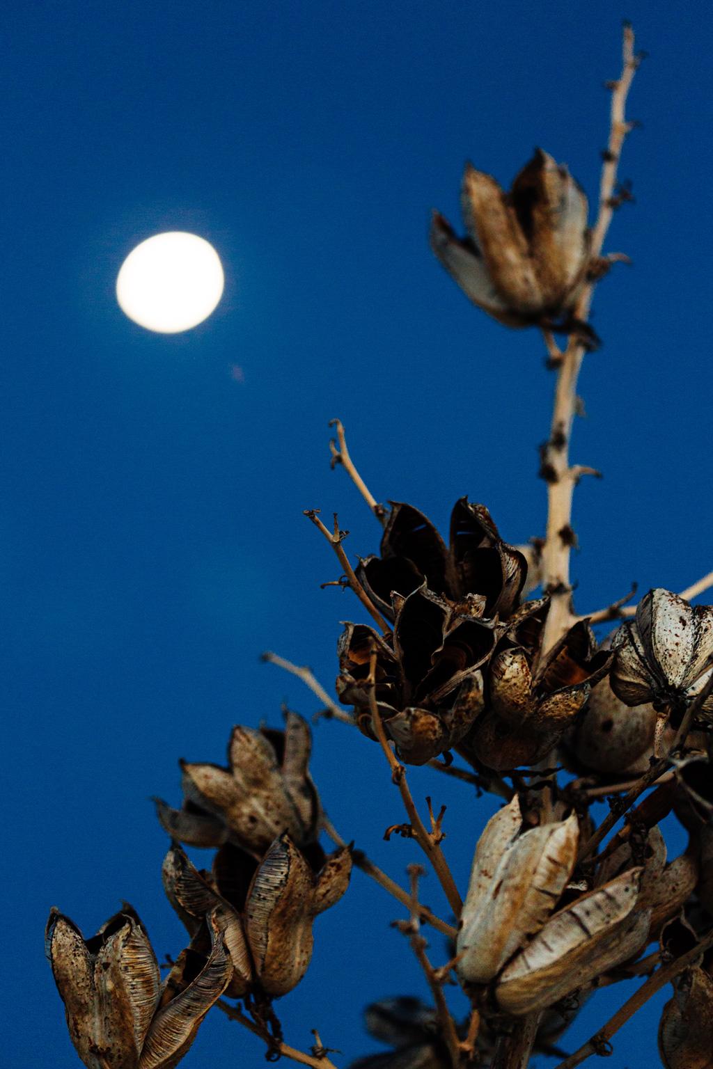 CindyGiovagnoli_WhiteSandsNationalMonument_NewMexico_Alamogordo_sunset_running_picnic_shelter-028.jpg