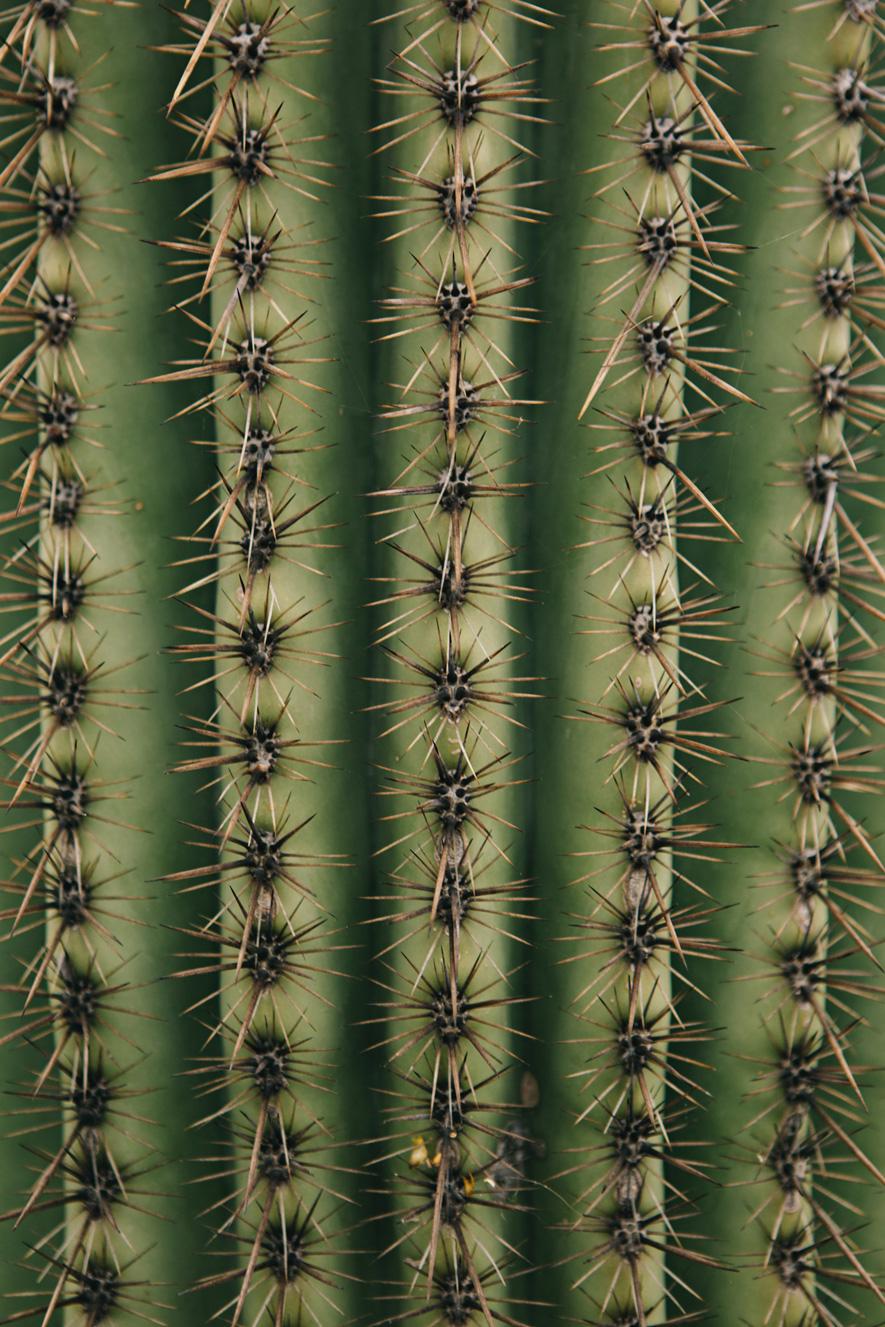 CindyGiovagnoli_Saguaro_National_Park_Arizona_desert_cactus_bloom_flowers-002.jpg