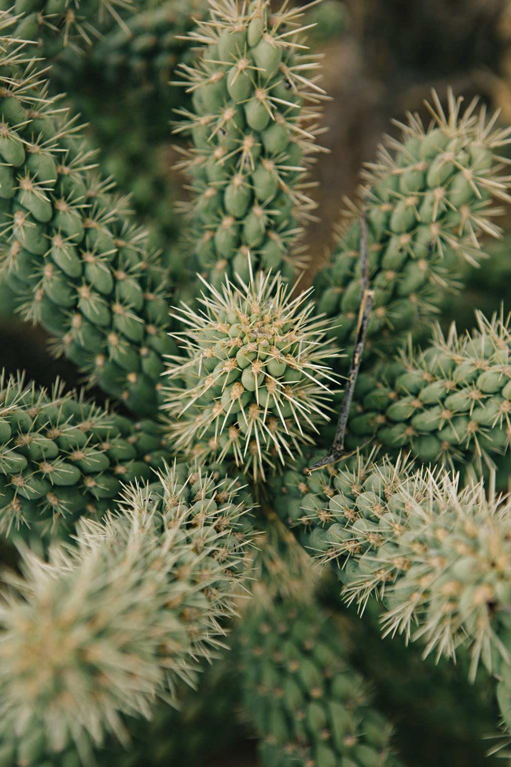 CindyGiovagnoli_Saguaro_National_Park_Arizona_desert_cactus_bloom_flowers-005.jpg