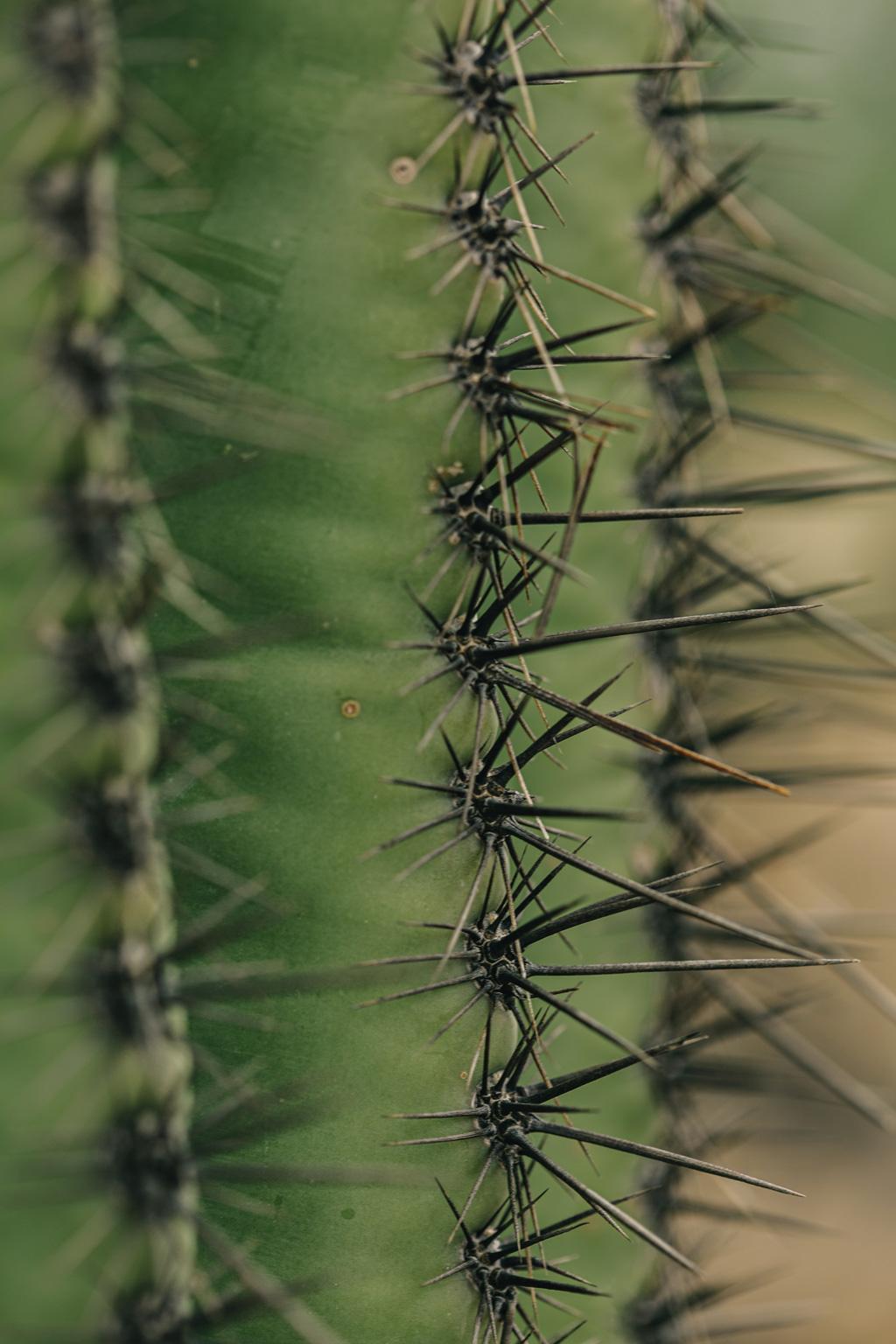 CindyGiovagnoli_Saguaro_National_Park_Arizona_desert_cactus_bloom_flowers-009.jpg