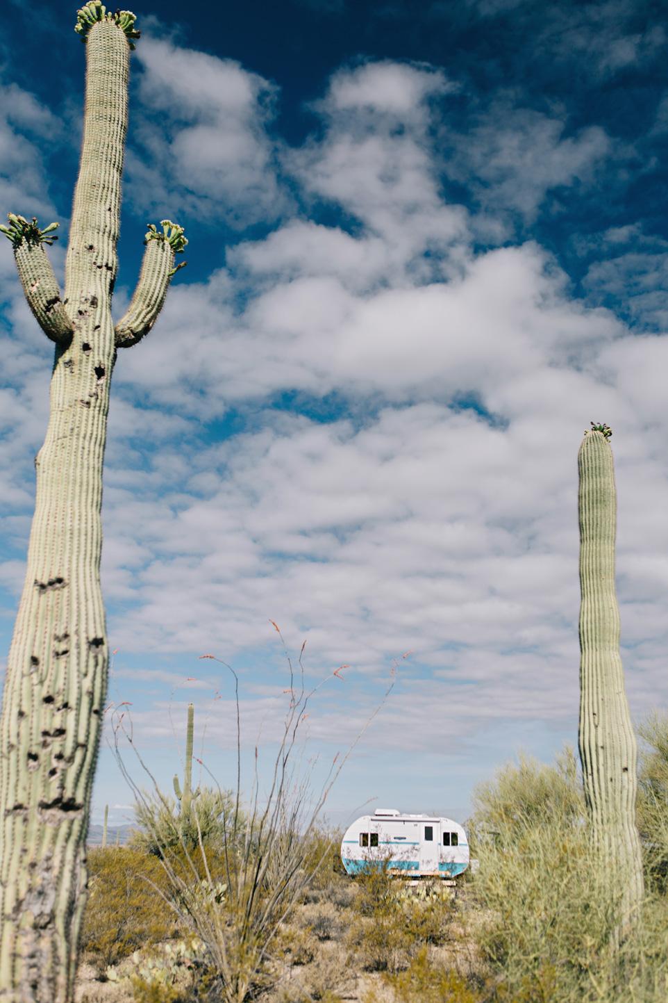 CindyGiovagnoli_Saguaro_National_Park_Arizona_desert_cactus_bloom_flowers-026.jpg