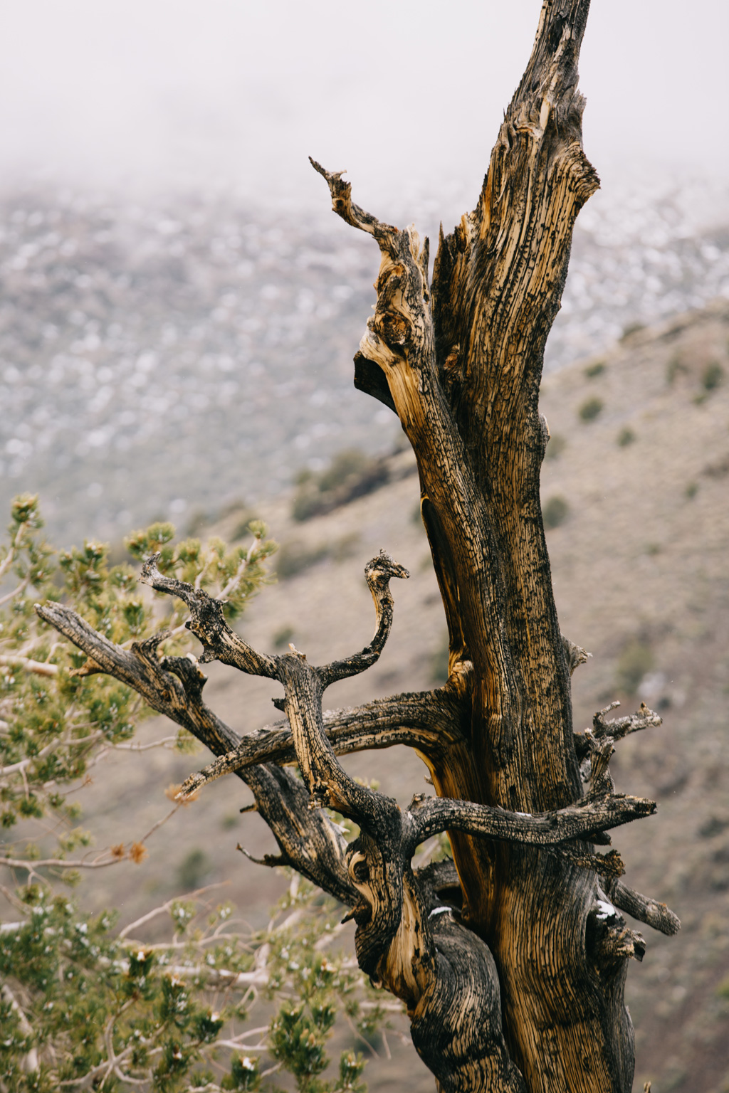 CindyGiovagnoli_DeathValley_NationalPark_California__BigPine_Bristlecone_travel_roadtrip-025.jpg