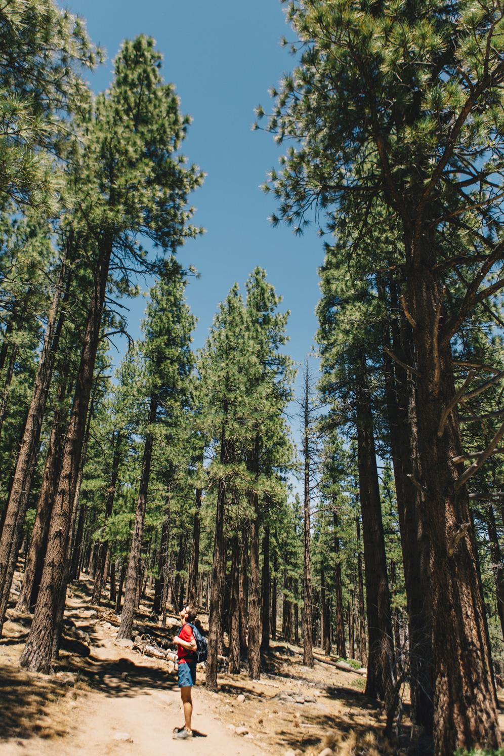CindyGiovagnoli_Galena_Creek_Visitors_Center_hike_Reno_Tahoe_Nevada_outdoor_activities-009.jpg
