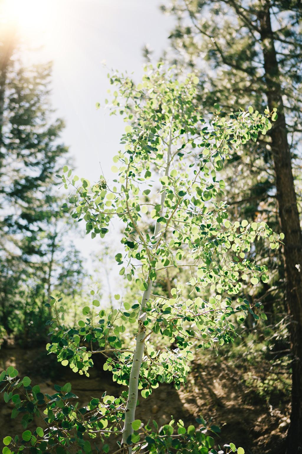 CindyGiovagnoli_Galena_Creek_Visitors_Center_hike_Reno_Tahoe_Nevada_outdoor_activities-014.jpg