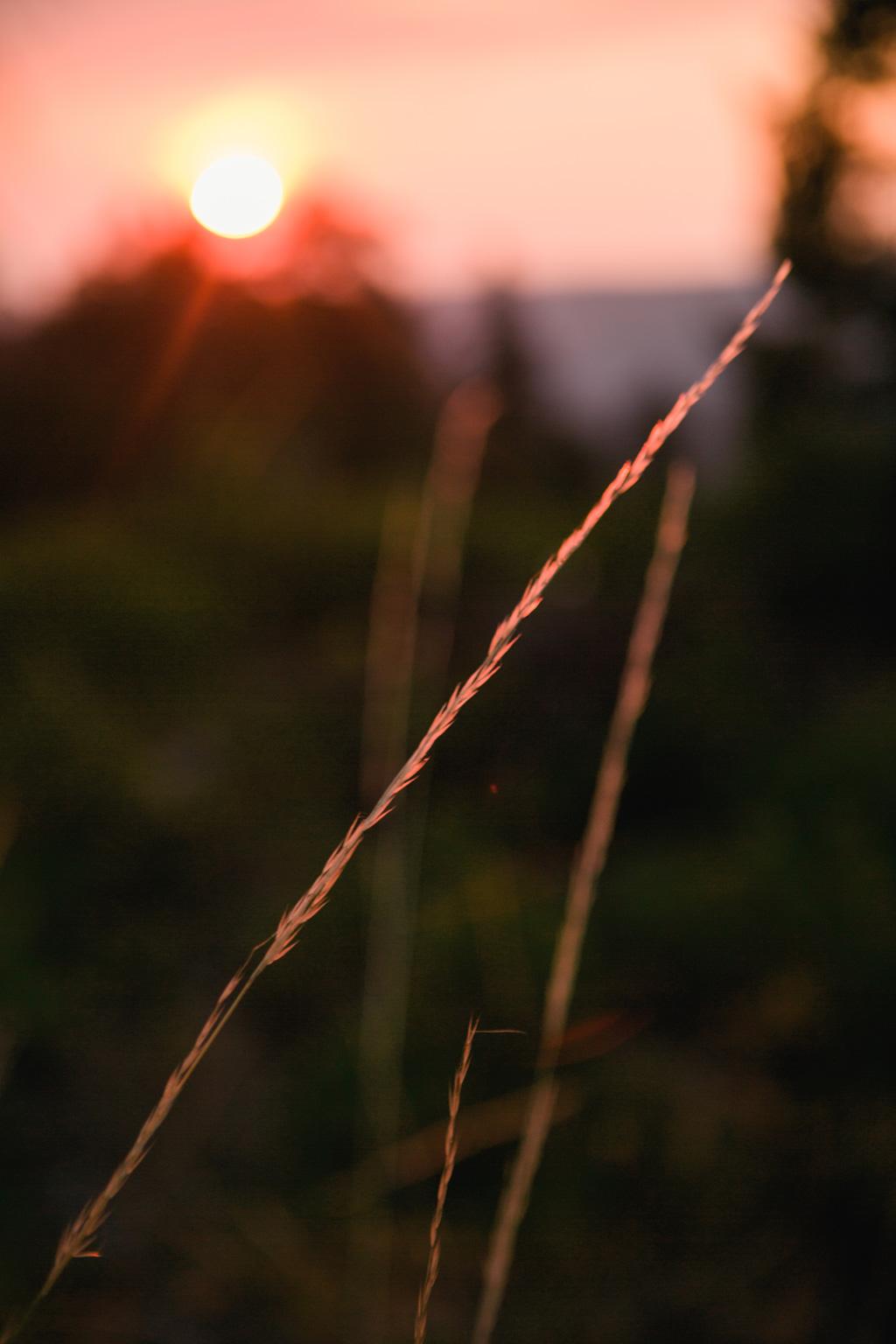 CindyGiovagnoli_California_Nevada_photographer_NevadaCity_PerseidMeteorShower_StampedeReservoir_truck_camping_VirginiaCity_MarkTwain_sunset-013.jpg