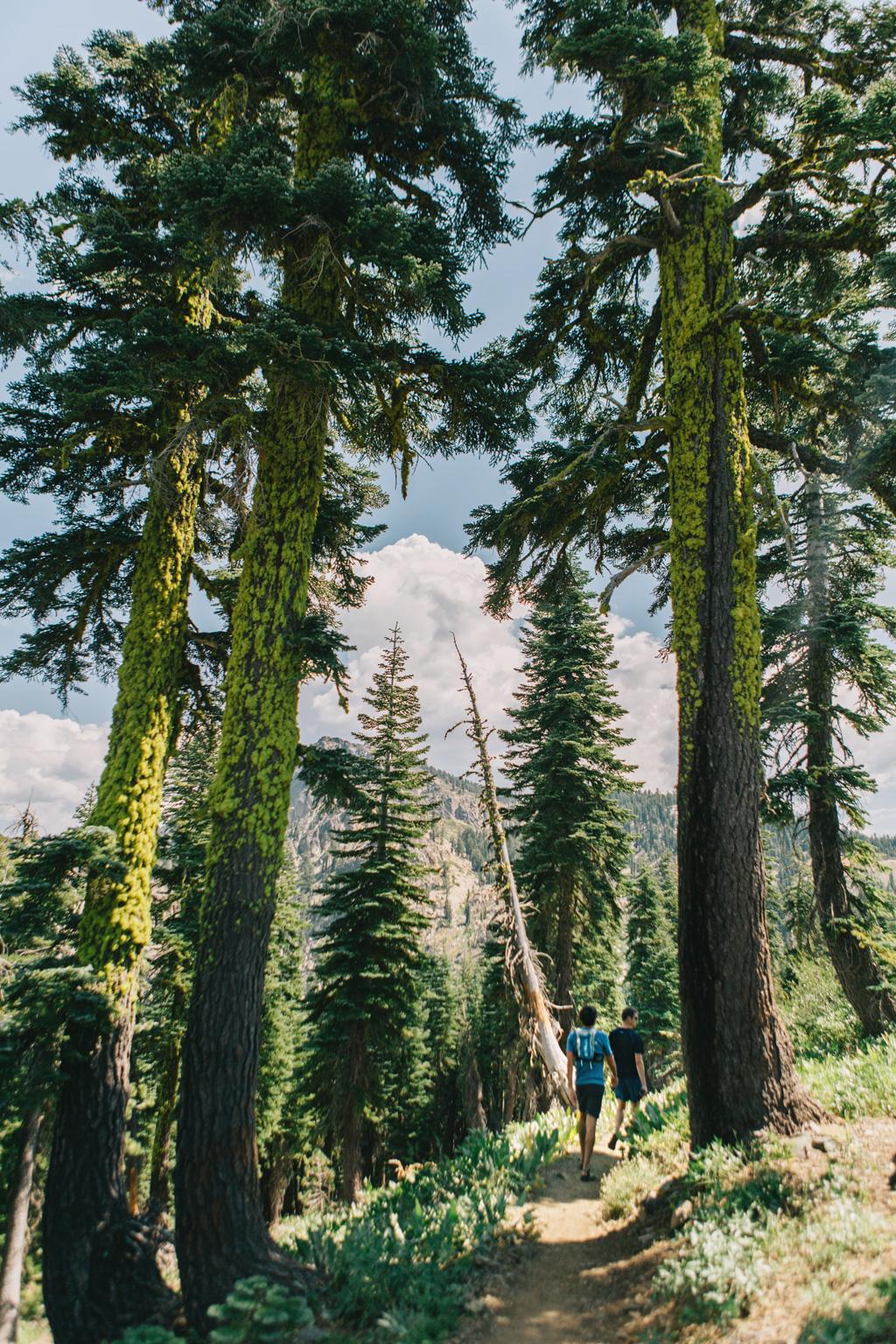 CindyGiovagnoli_outdoors_photographer_Sierra_Buttes_firetower_watchtower_Sardine_Snag_Bear_lake_hike_swim_camp-004.jpg