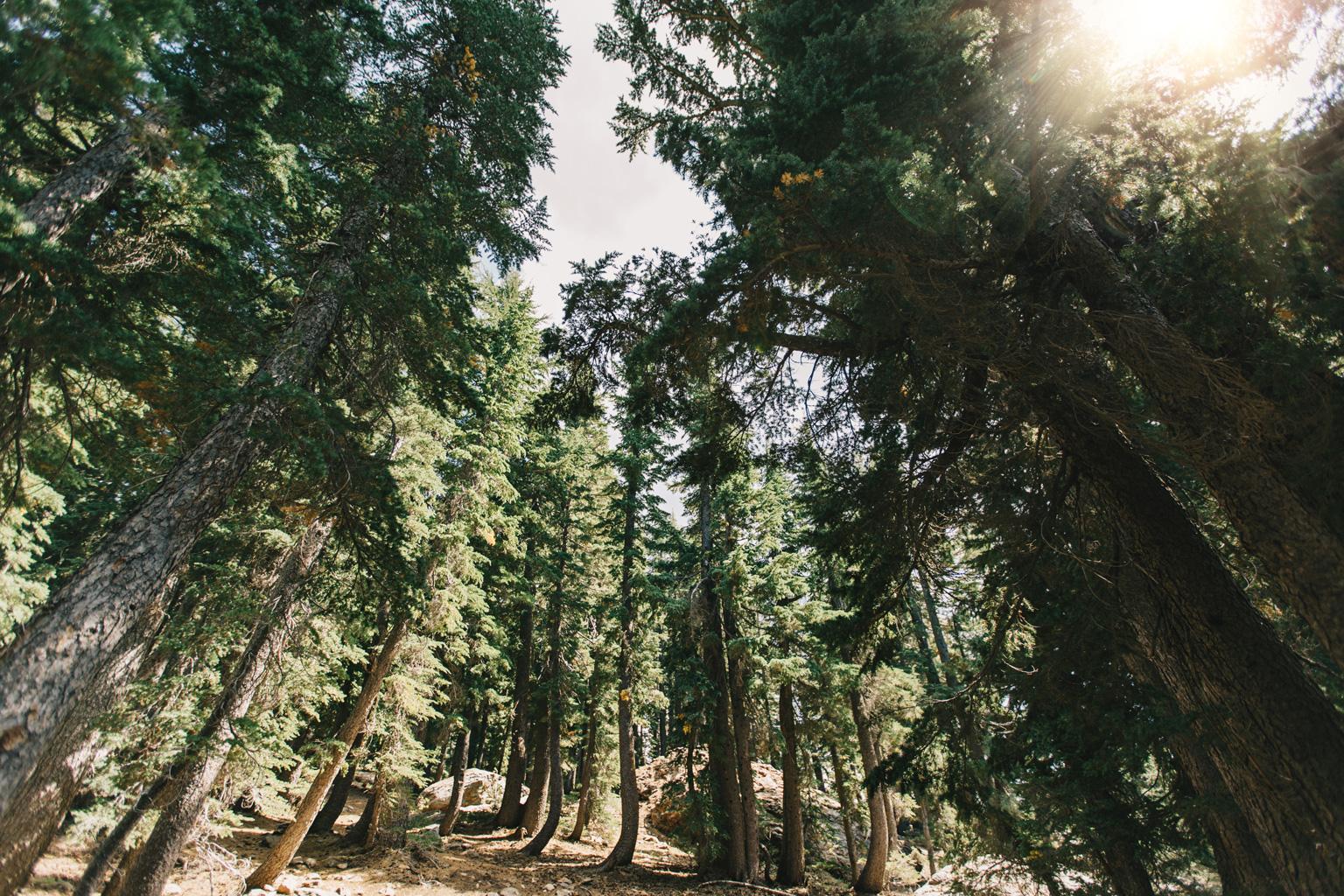 CindyGiovagnoli_outdoors_photographer_Sierra_Buttes_firetower_watchtower_Sardine_Snag_Bear_lake_hike_swim_camp-010.jpg