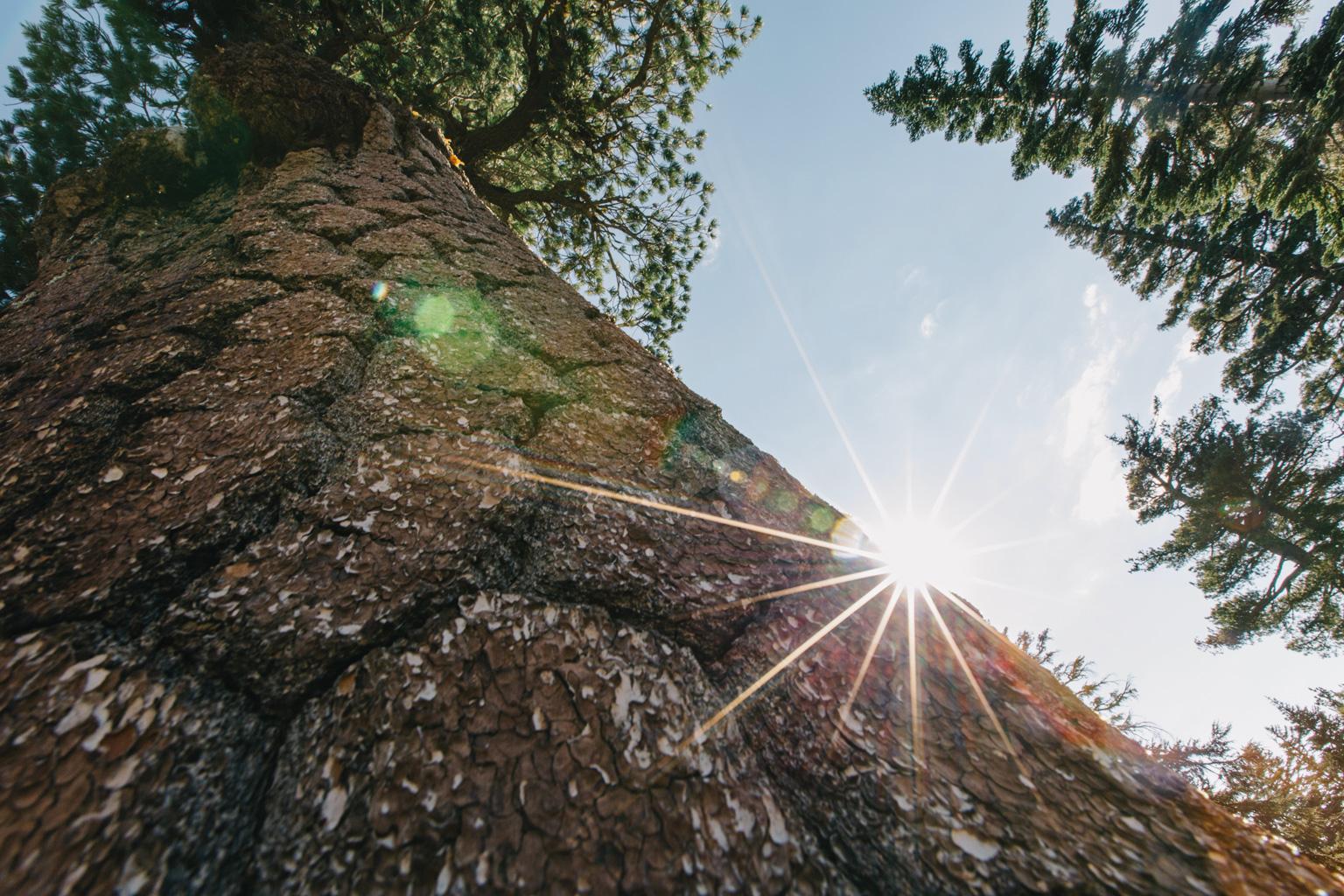 CindyGiovagnoli_outdoors_photographer_Sierra_Buttes_firetower_watchtower_Sardine_Snag_Bear_lake_hike_swim_camp-038.jpg