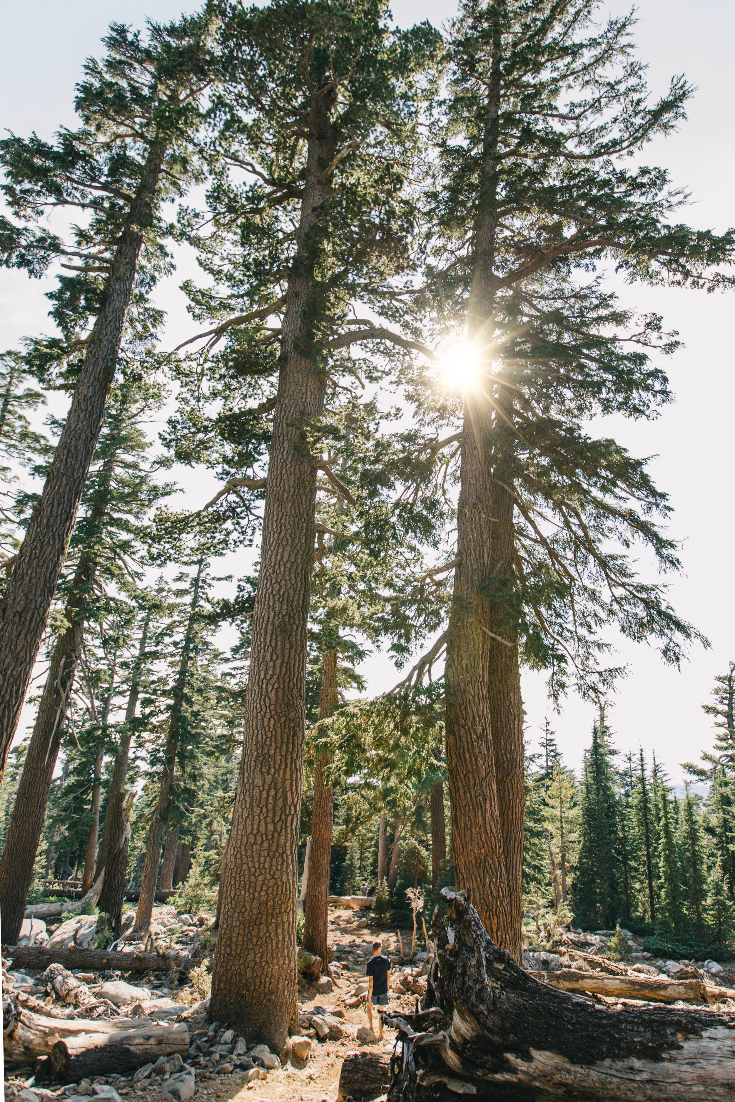 CindyGiovagnoli_outdoors_photographer_Sierra_Buttes_firetower_watchtower_Sardine_Snag_Bear_lake_hike_swim_camp-035.jpg