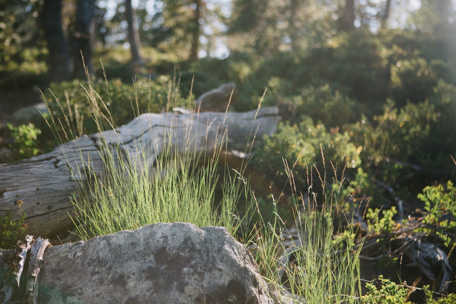 CindyGiovagnoli_outdoors_photographer_Sierra_Buttes_firetower_watchtower_Sardine_Snag_Bear_lake_hike_swim_camp-064.jpg