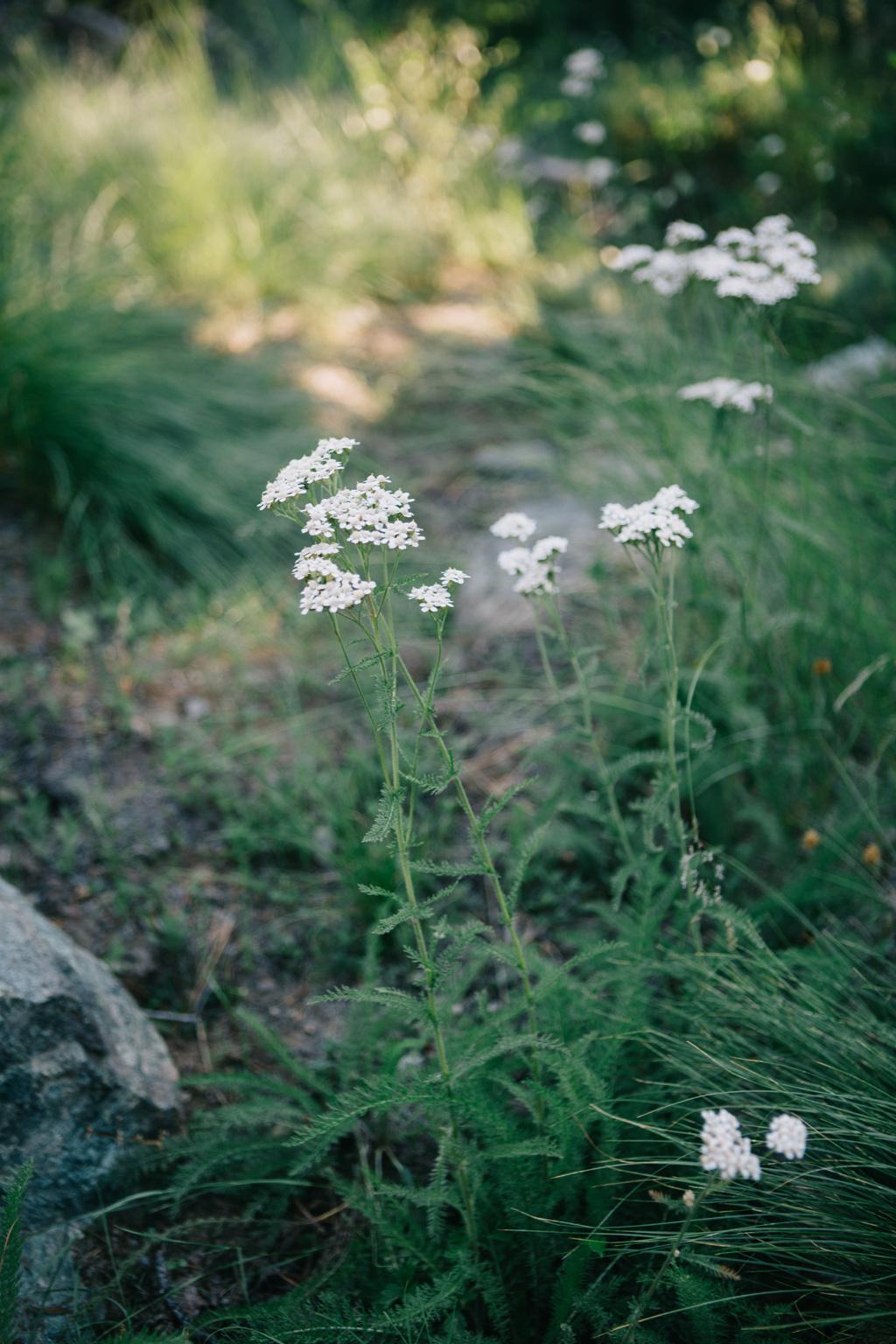 CindyGiovagnoli_outdoors_photographer_Sierra_Buttes_firetower_watchtower_Sardine_Snag_Bear_lake_hike_swim_camp-065.jpg