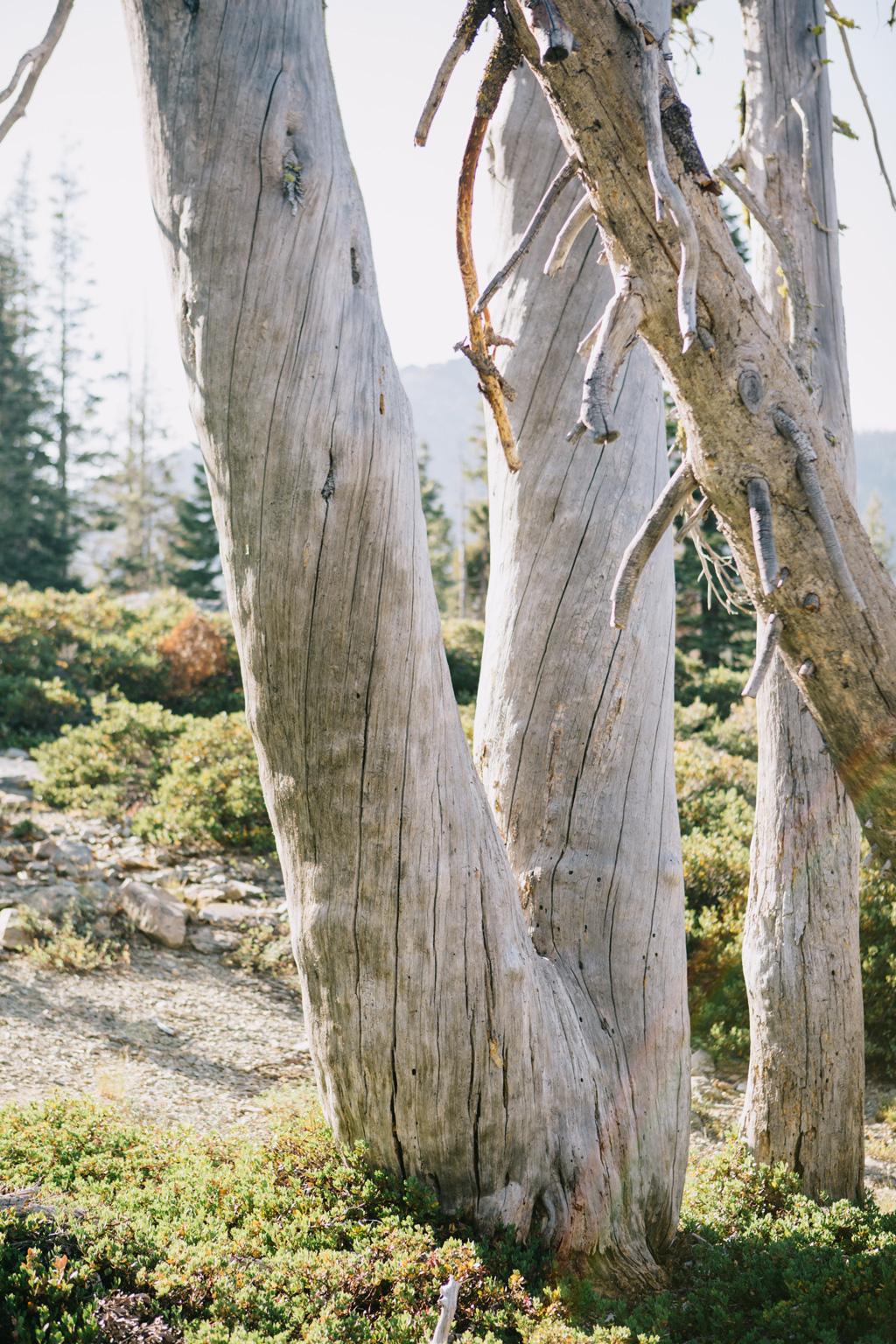 CindyGiovagnoli_outdoors_photographer_Sierra_Buttes_firetower_watchtower_Sardine_Snag_Bear_lake_hike_swim_camp-066.jpg