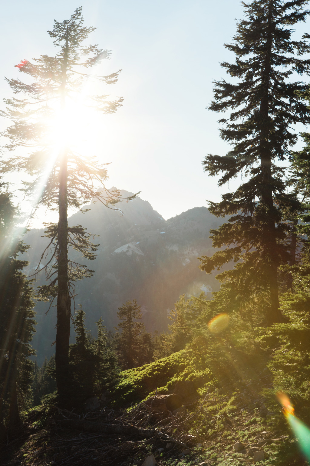 CindyGiovagnoli_Redwoods_CraterLake_MountRainier_PNW_National_Park_trees_camp_road_trip-006.jpg