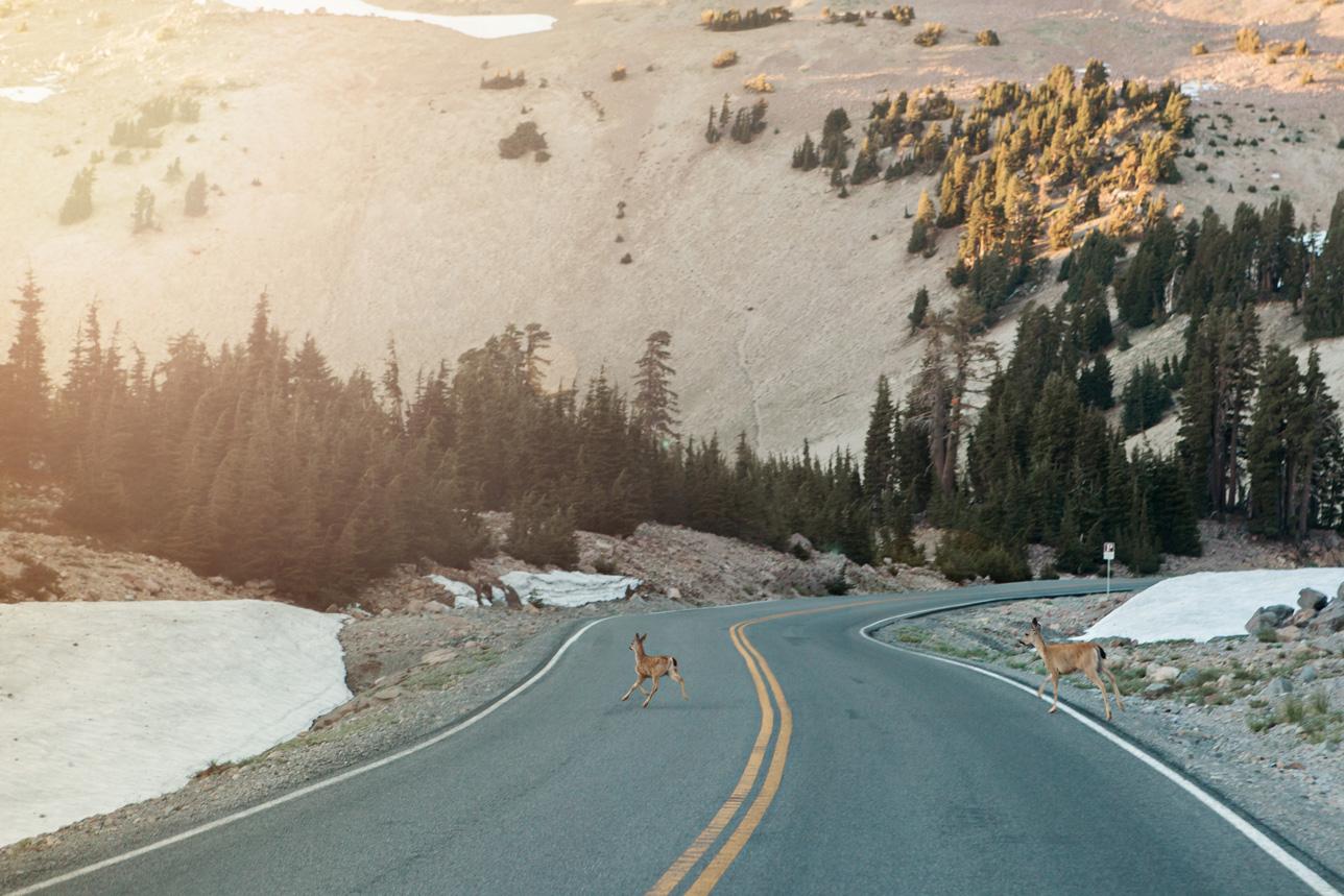 CindyGiovagnoli_Lassen_Volcanic_National_Park_California_camp_road_trip-023.jpg