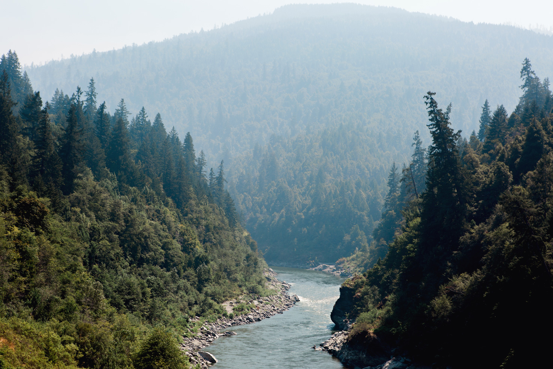 CindyGiovagnoli_Redwoods_National_Park_Whiskeytown_Reservoir_Pacific_Ocean_elk-001.jpg