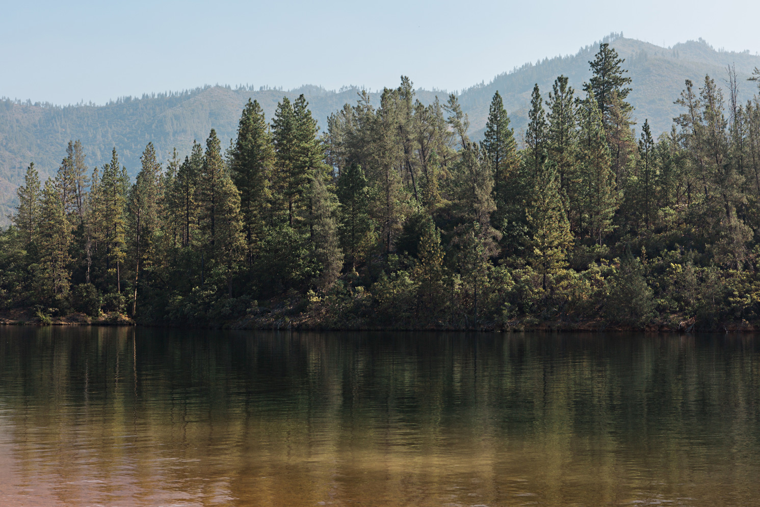 CindyGiovagnoli_Redwoods_National_Park_Whiskeytown_Reservoir_Pacific_Ocean_elk-003.jpg