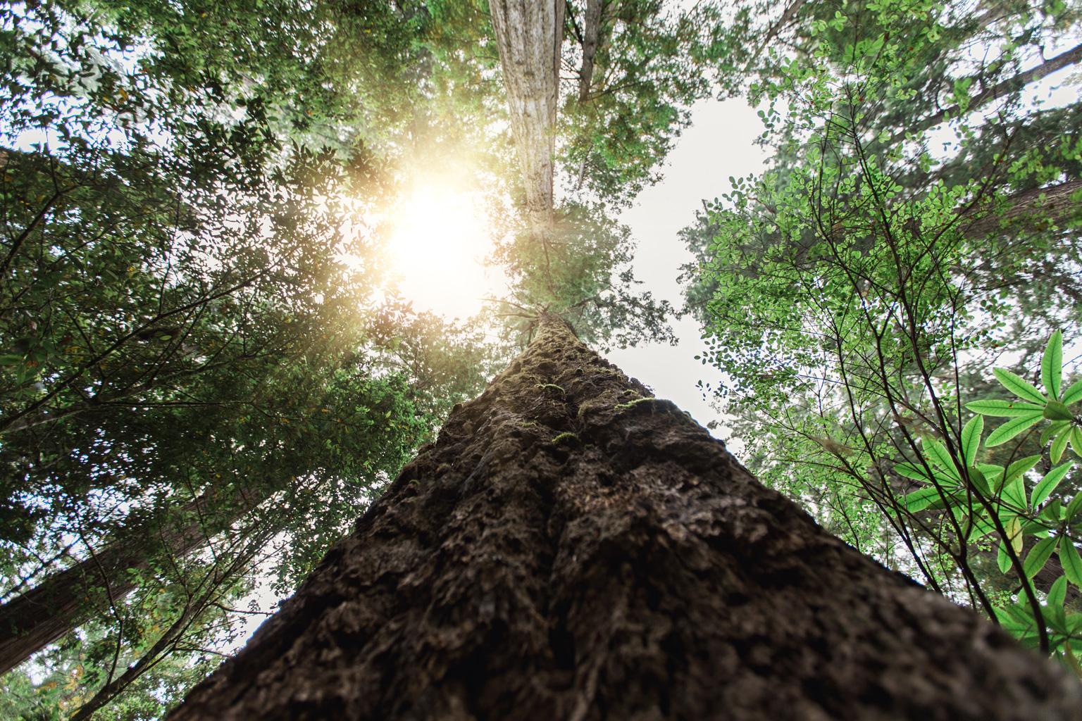 CindyGiovagnoli_Redwoods_National_Park_Whiskeytown_Reservoir_Pacific_Ocean_elk-012.jpg