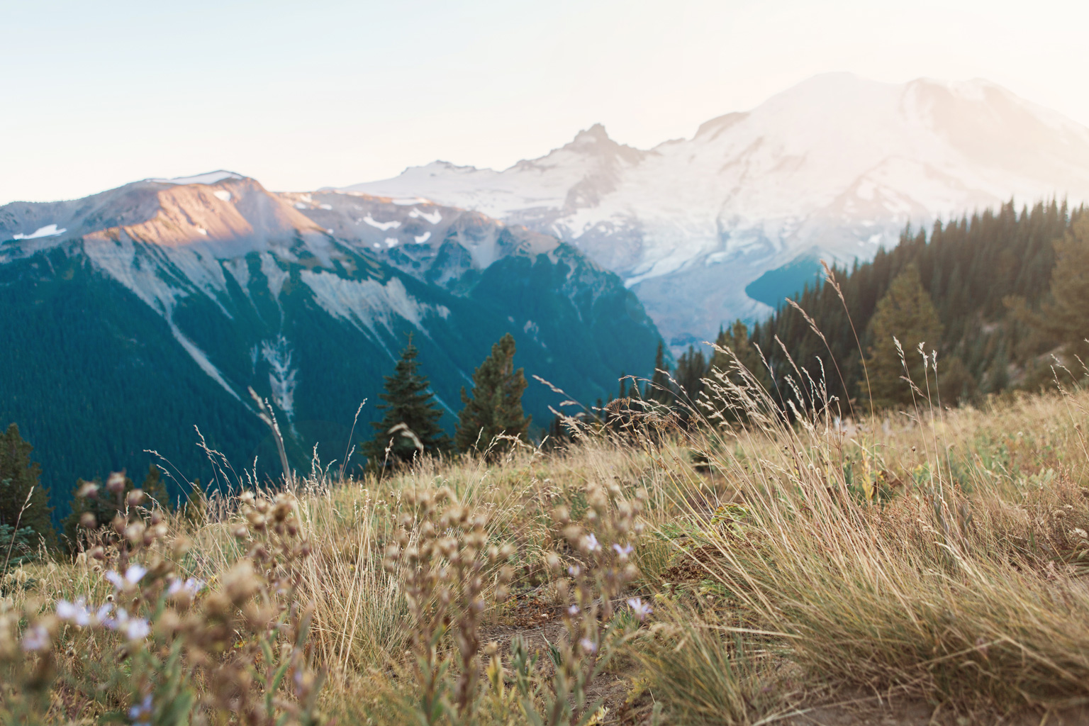 CindyGiovagnoli_Mount_Rainier_National_Park_Washington-006.jpg