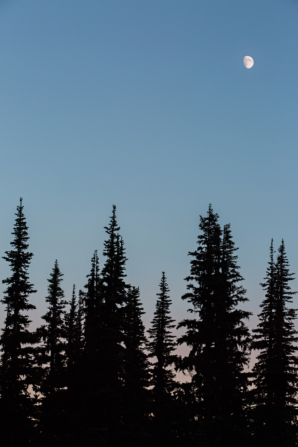 CindyGiovagnoli_Mount_Rainier_National_Park_Washington-020.jpg