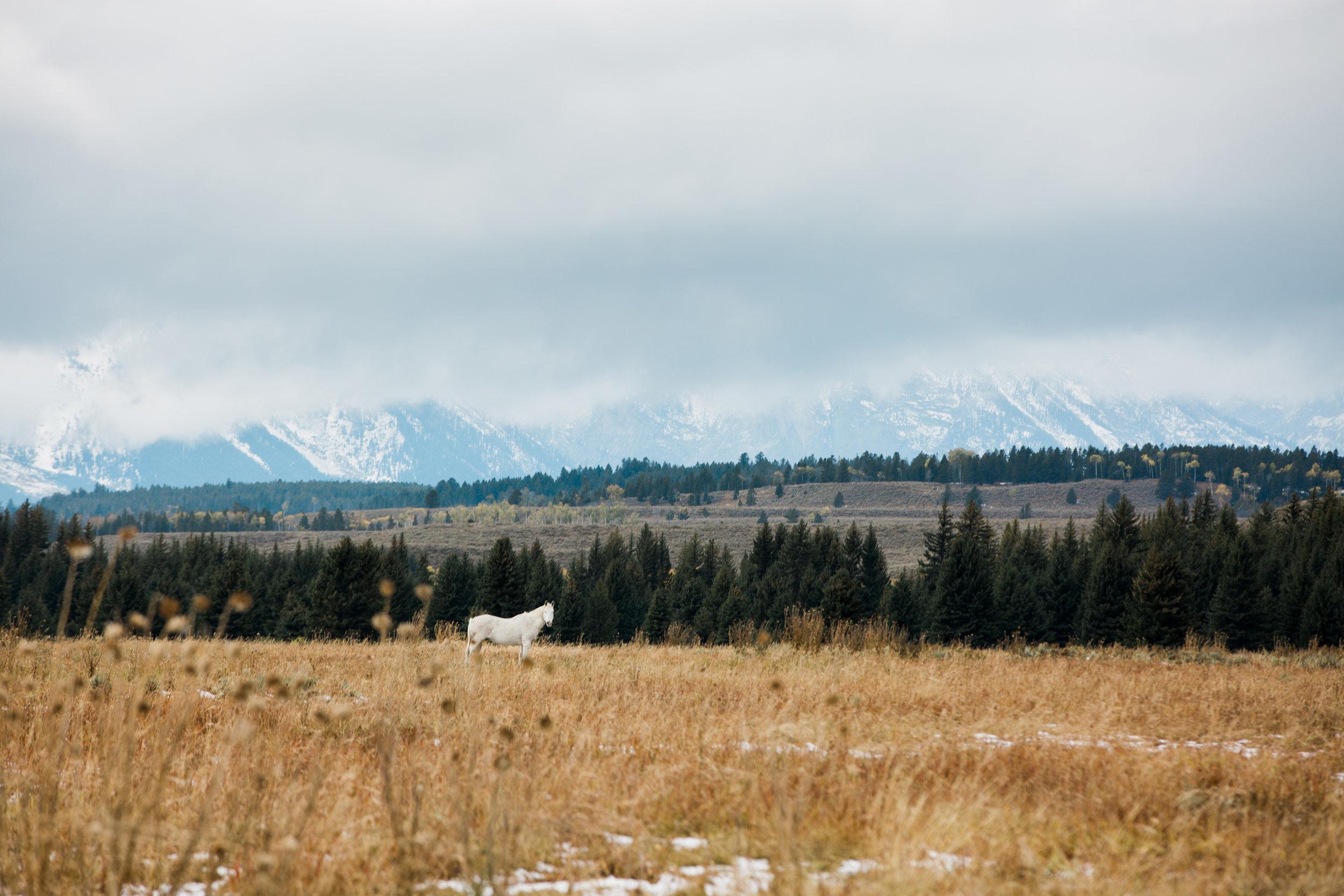 CindyGiovagnoli_outdoor_adventure_photography_Grand_Teton_Yellowstone_Glacier_National_Park_Montana_Wyoming_South_Dakota_Mount_Rushmore_Badlands-007.jpg