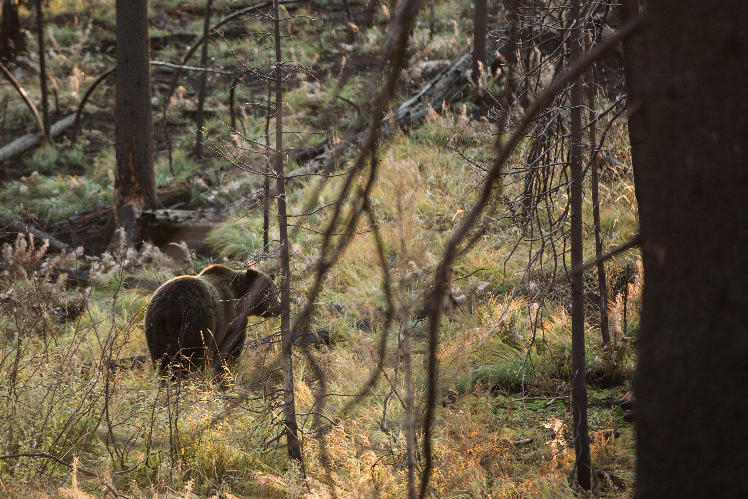CindyGiovagnoli_outdoor_adventure_photography_Grand_Teton_Yellowstone_Glacier_National_Park_Montana_Wyoming_South_Dakota_Mount_Rushmore_Badlands-013.jpg