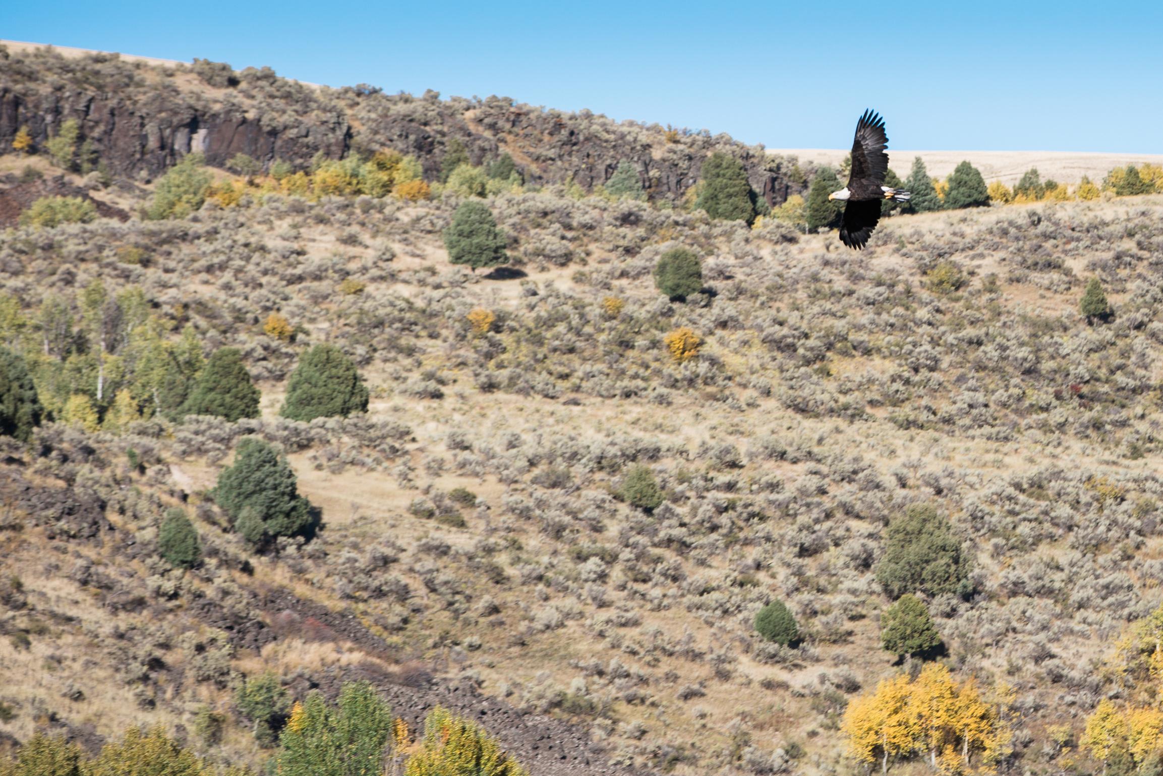 CindyGiovagnoli_outdoor_adventure_photography_Grand_Teton_Yellowstone_Glacier_National_Park_Montana_Wyoming_South_Dakota_Mount_Rushmore_Badlands-016.jpg
