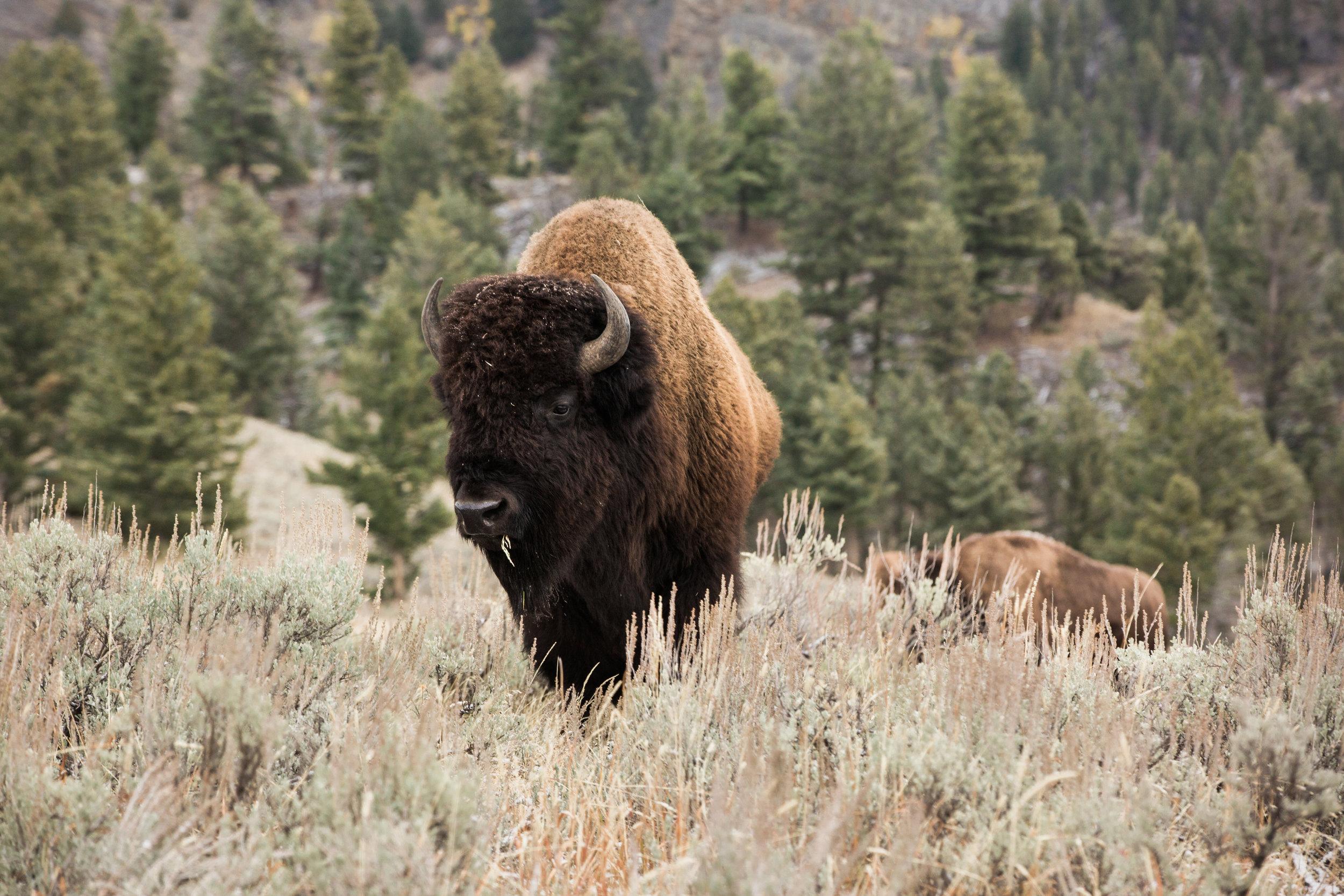 CindyGiovagnoli_outdoor_adventure_photography_Grand_Teton_Yellowstone_Glacier_National_Park_Montana_Wyoming_South_Dakota_Mount_Rushmore_Badlands-023.jpg