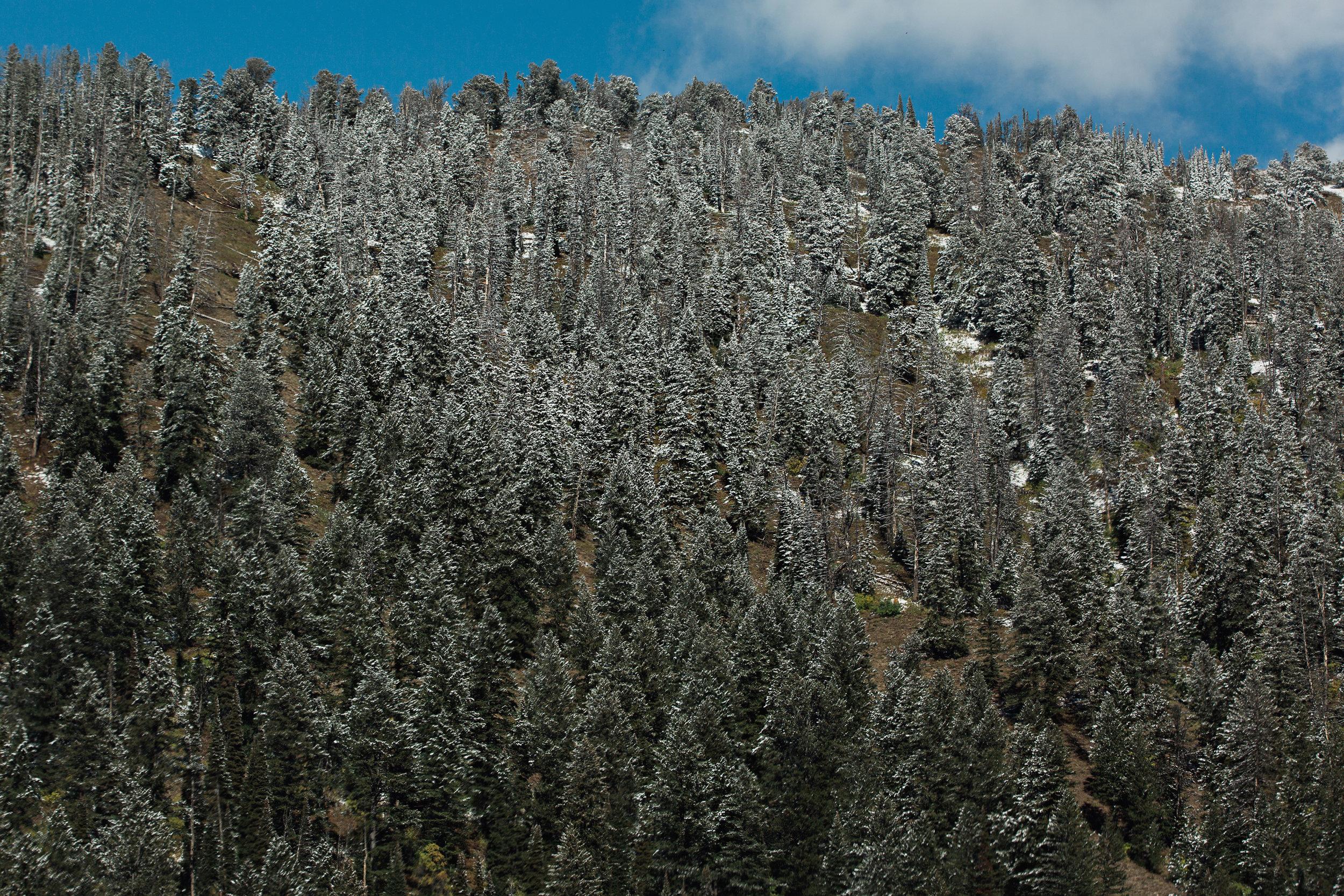 Cindy_Giovagnoli_Idaho_Wyoming_Grand_Teton_National_Park_autumn_aspens_camping_mountains-011.jpg