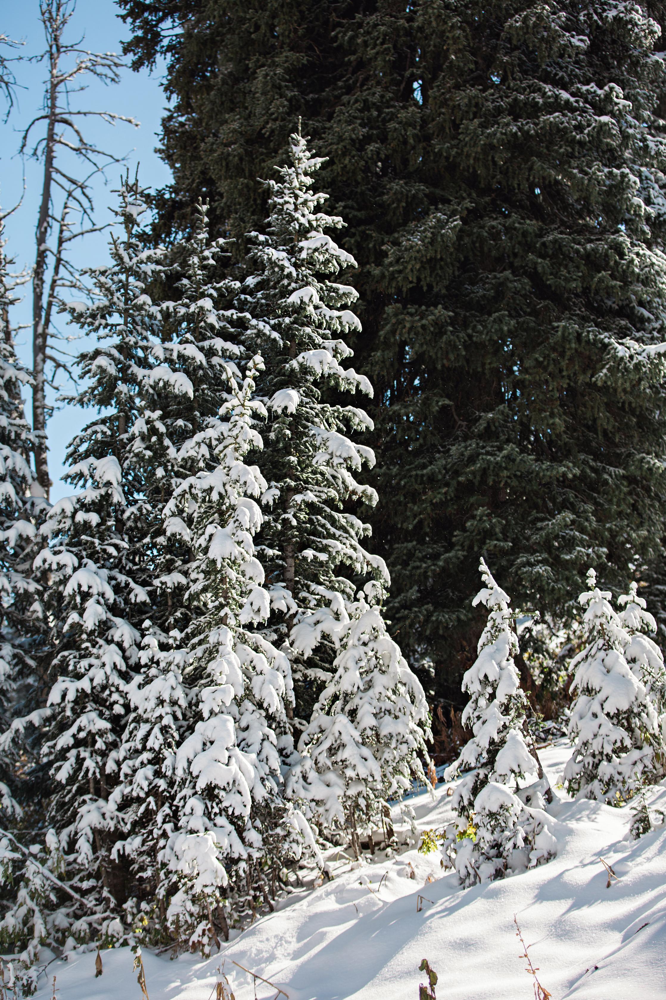 Cindy_Giovagnoli_Idaho_Wyoming_Grand_Teton_National_Park_autumn_aspens_camping_mountains-012.jpg