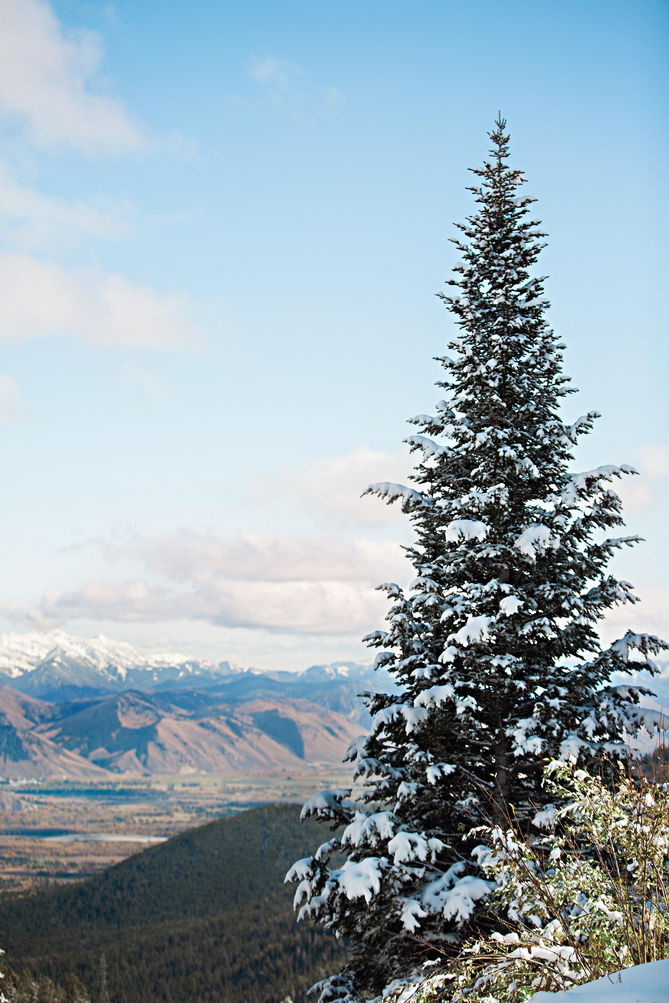 Cindy_Giovagnoli_Idaho_Wyoming_Grand_Teton_National_Park_autumn_aspens_camping_mountains-015.jpg