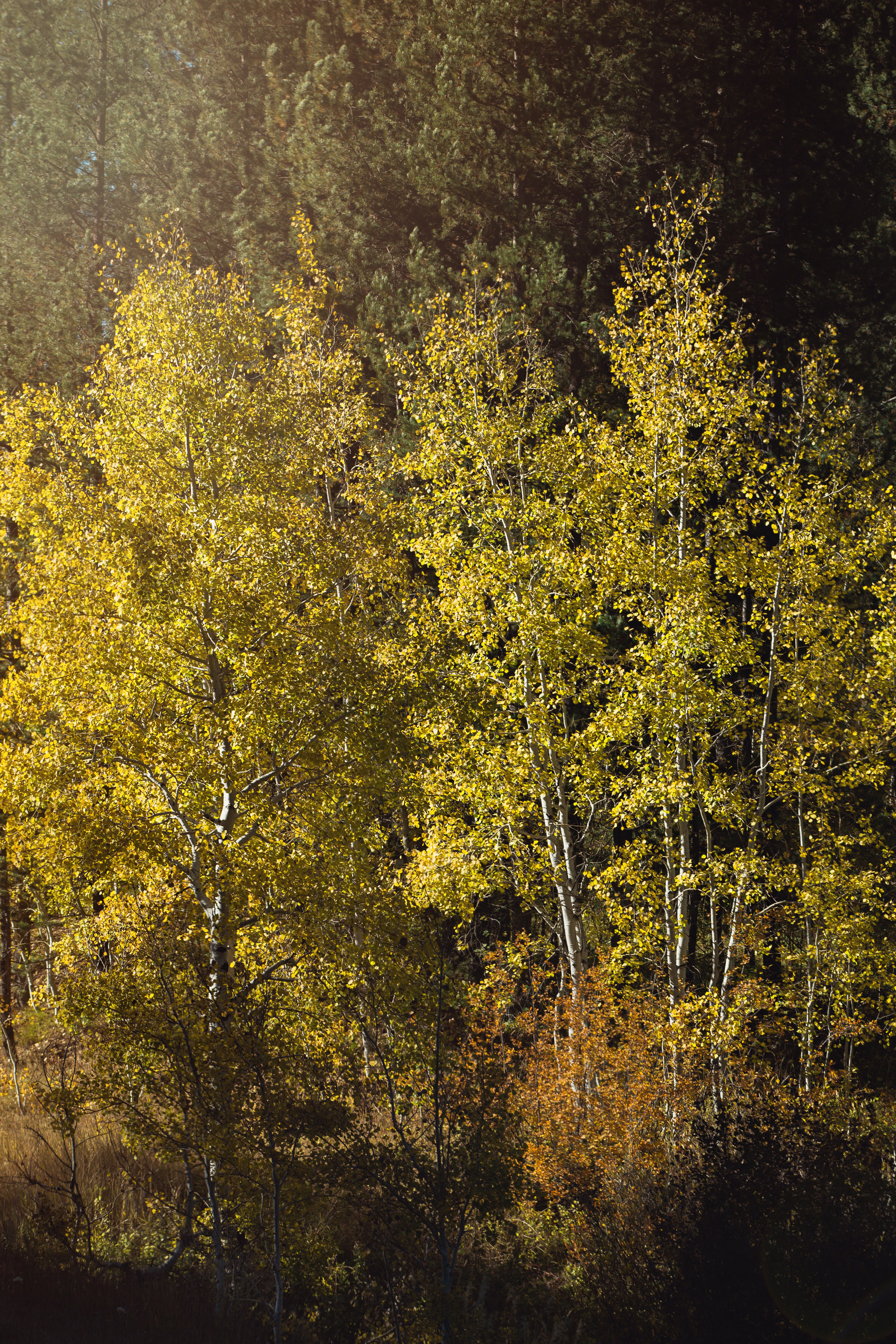 Cindy_Giovagnoli_Idaho_Wyoming_Grand_Teton_National_Park_autumn_aspens_camping_mountains-019.jpg