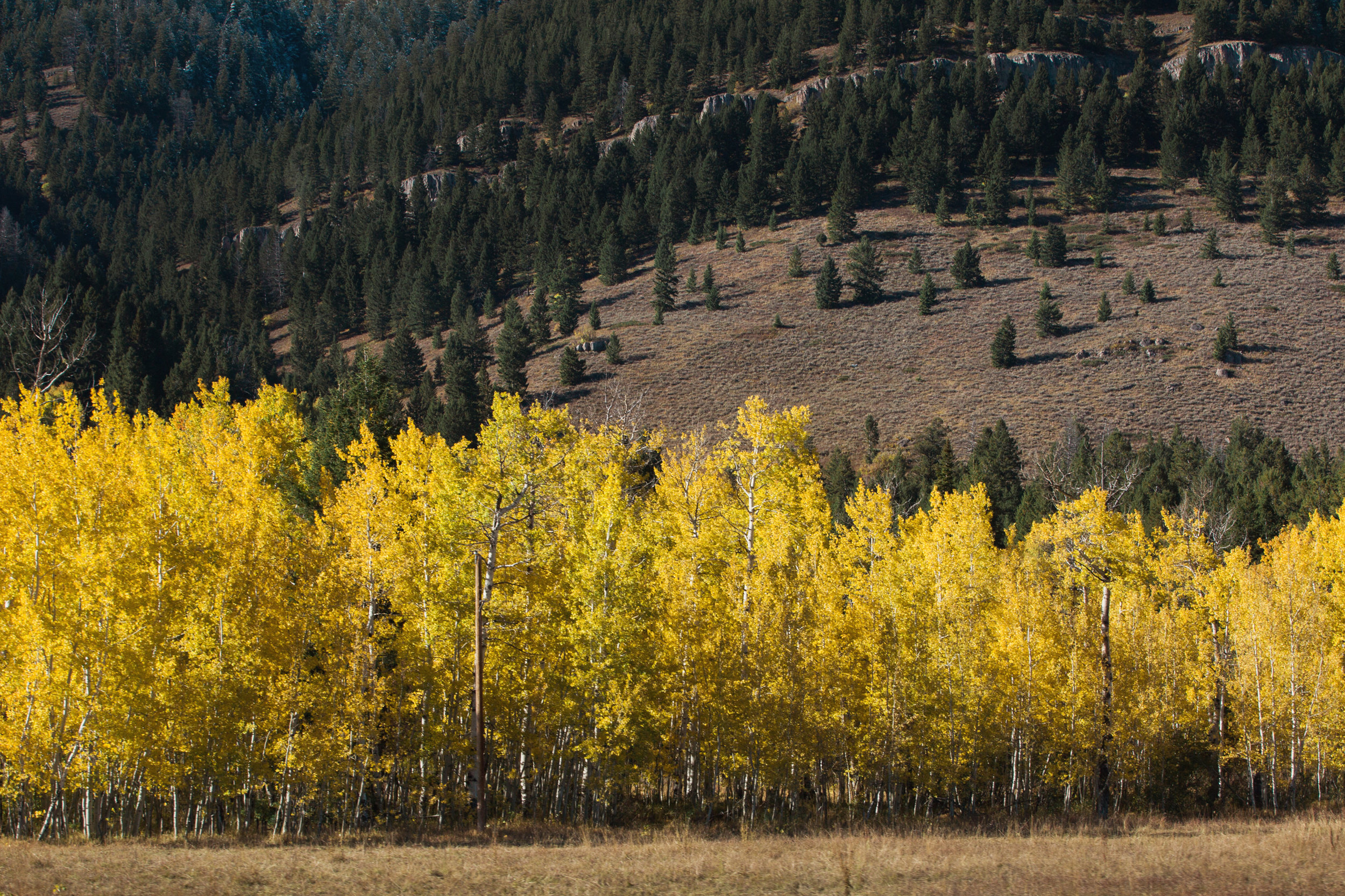 Cindy_Giovagnoli_Idaho_Wyoming_Grand_Teton_National_Park_autumn_aspens_camping_mountains-021.jpg