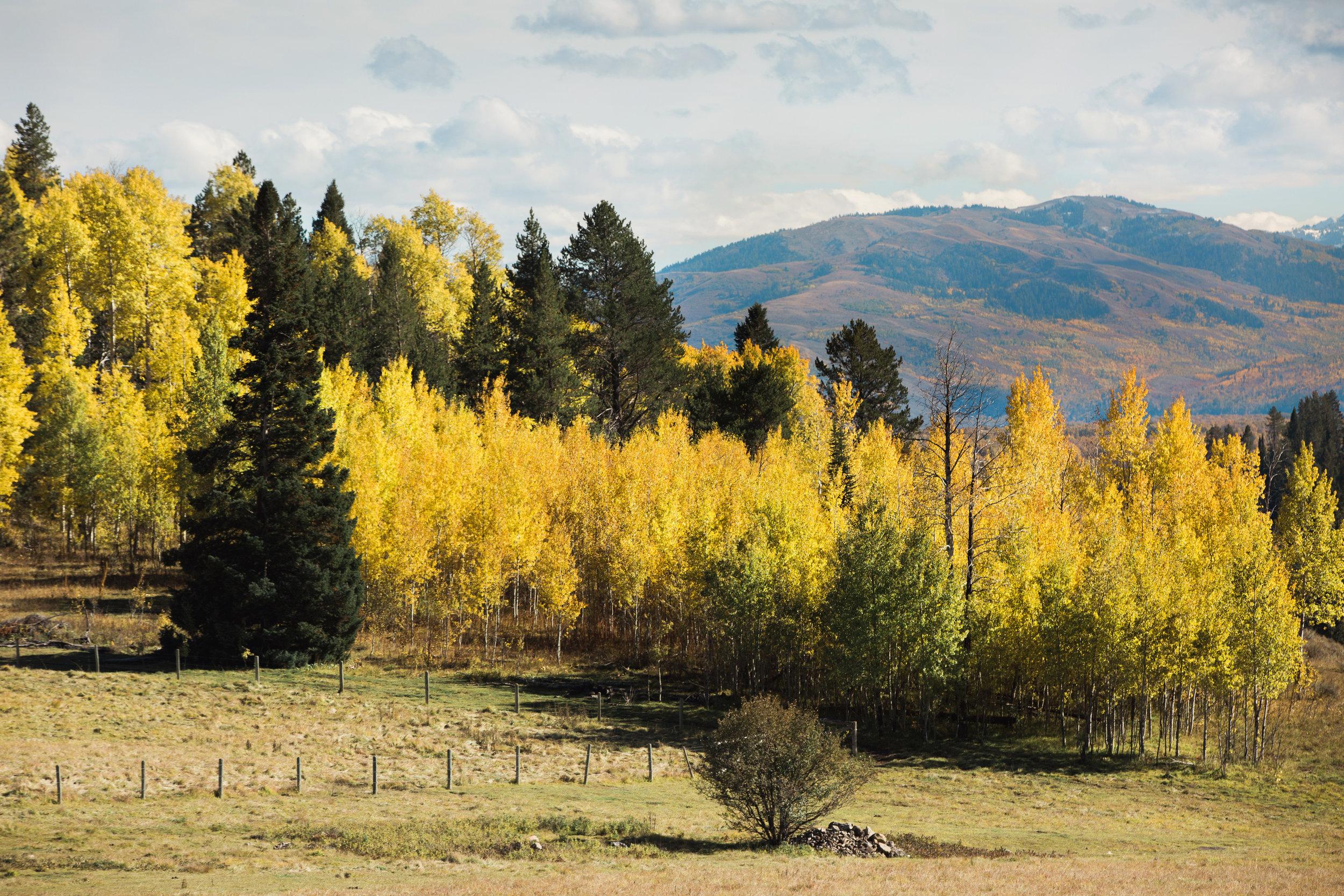 Cindy_Giovagnoli_Idaho_Wyoming_Grand_Teton_National_Park_autumn_aspens_camping_mountains-020.jpg