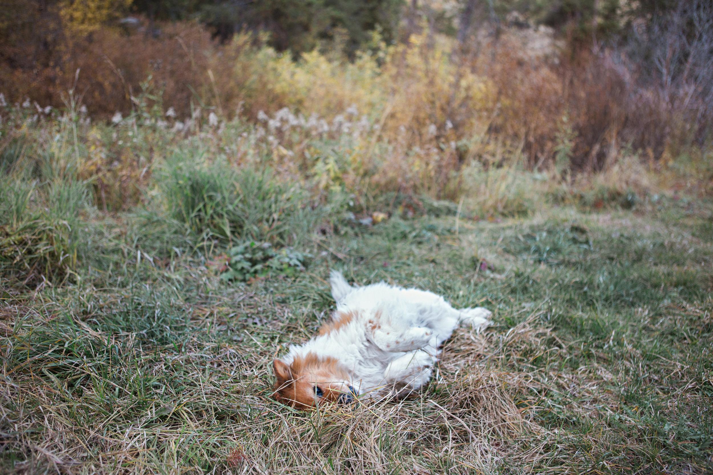 Cindy_Giovagnoli_Idaho_Wyoming_Grand_Teton_National_Park_autumn_aspens_camping_mountains-026.jpg