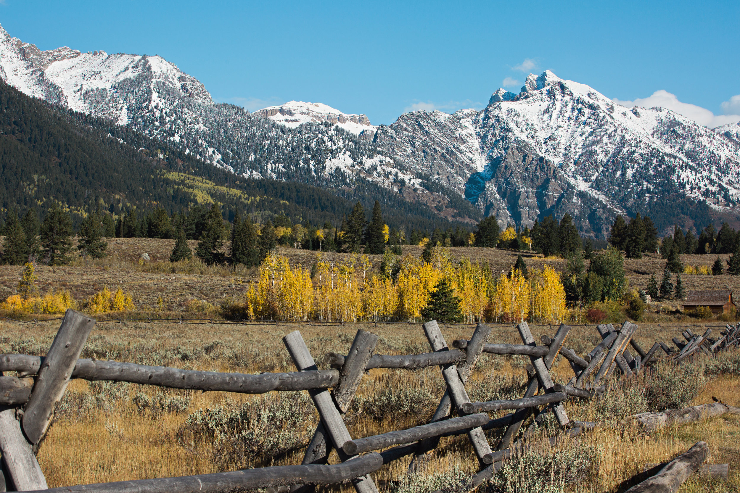 CindyGiovagnoli_Grand_Teton_National_Park_mountains_Bison_Autumn_Wyoming_Mormon_Row_aspens_fall_outdoor_photographer-001.jpg