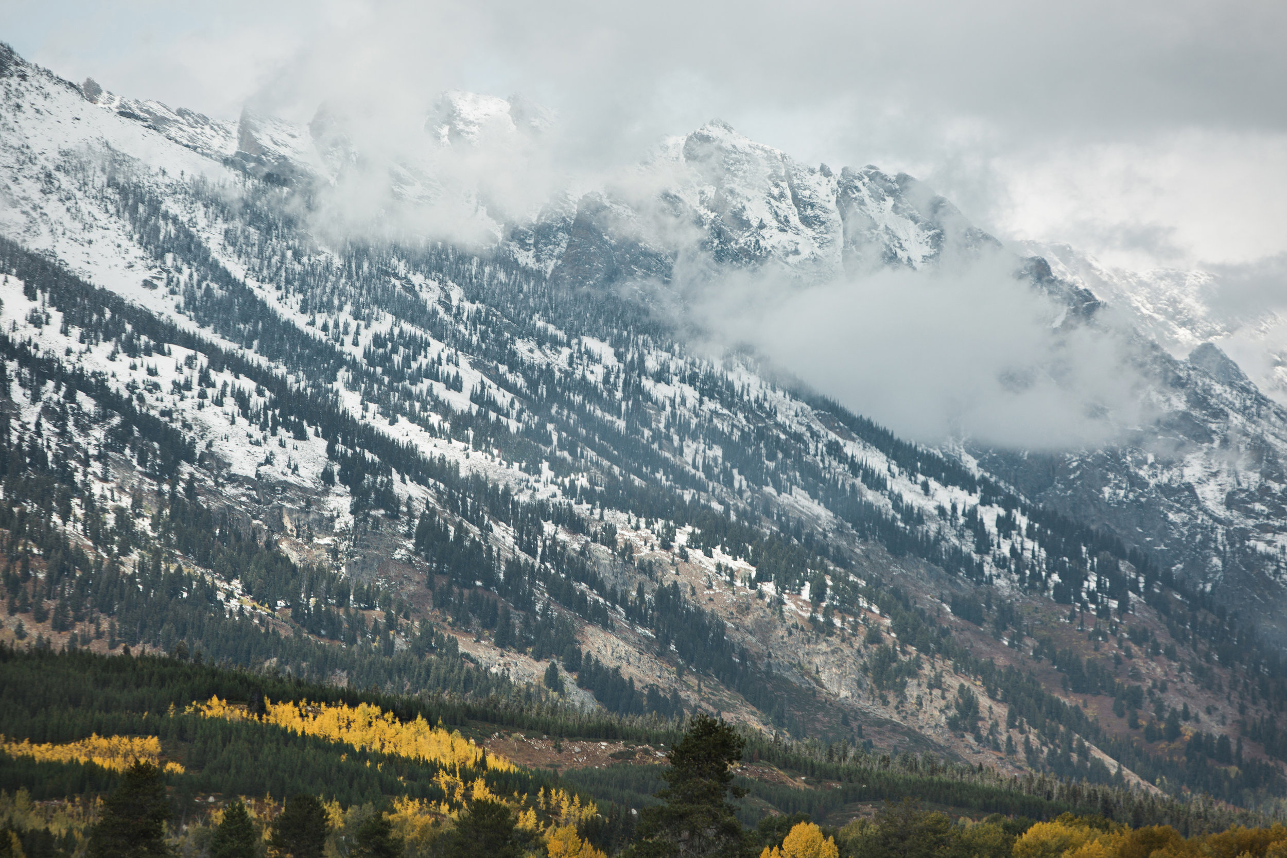 CindyGiovagnoli_Grand_Teton_National_Park_mountains_Bison_Autumn_Wyoming_Mormon_Row_aspens_fall_outdoor_photographer-007.jpg
