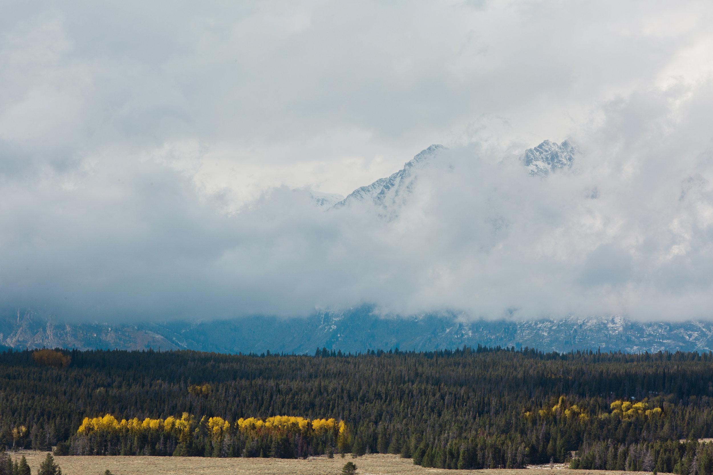 CindyGiovagnoli_Grand_Teton_National_Park_mountains_Bison_Autumn_Wyoming_Mormon_Row_aspens_fall_outdoor_photographer-016.jpg