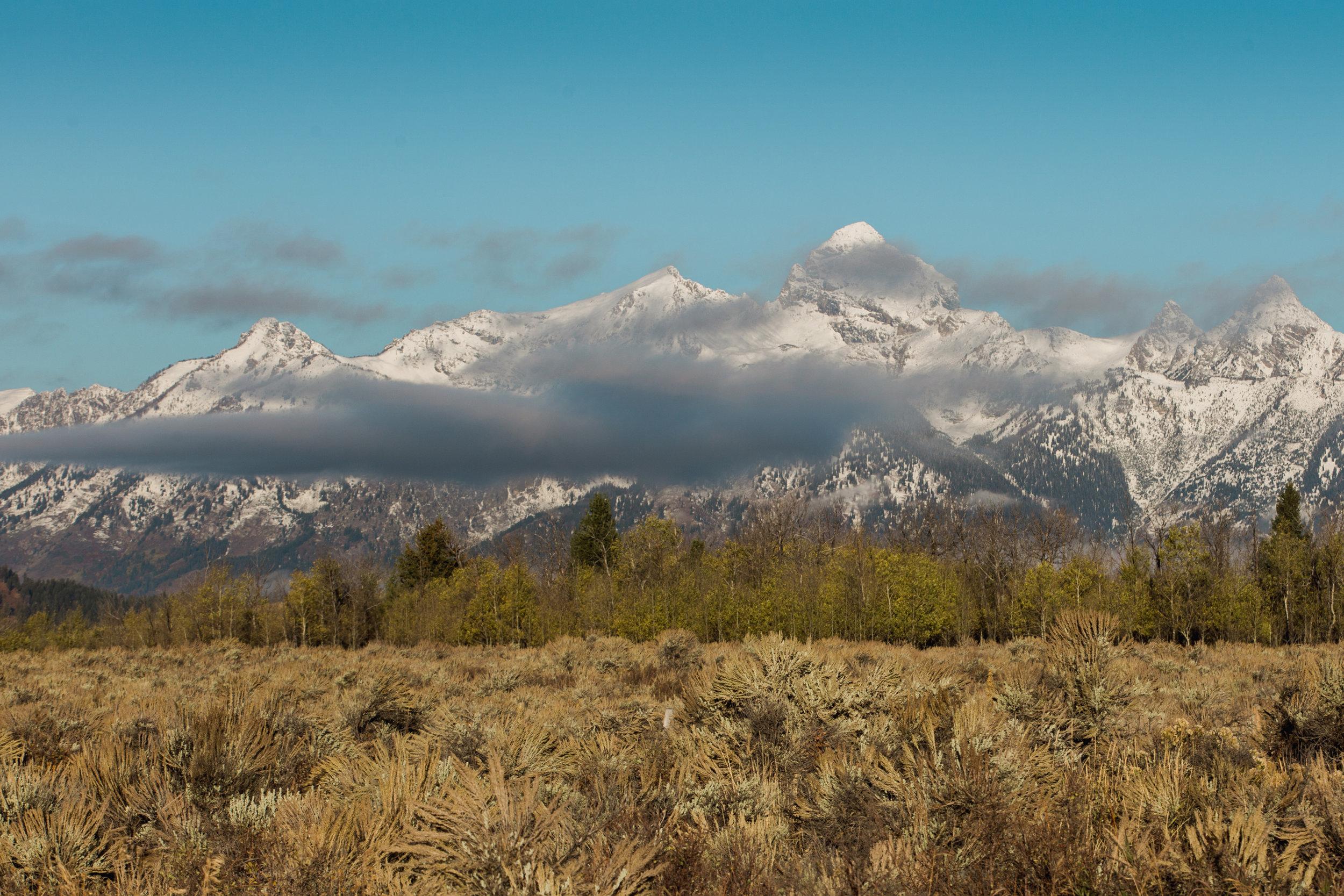 CindyGiovagnoli_Grand_Teton_National_Park_mountains_Bison_Autumn_Wyoming_Mormon_Row_aspens_fall_outdoor_photographer-018.jpg