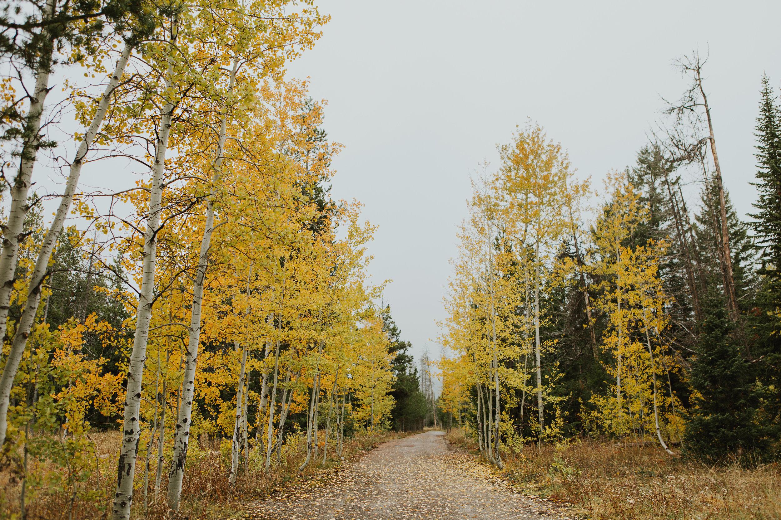 CindyGiovagnoli_Grand_Teton_National_Park_mountains_Bison_Autumn_Wyoming_Mormon_Row_aspens_fall_outdoor_photographer-019.jpg