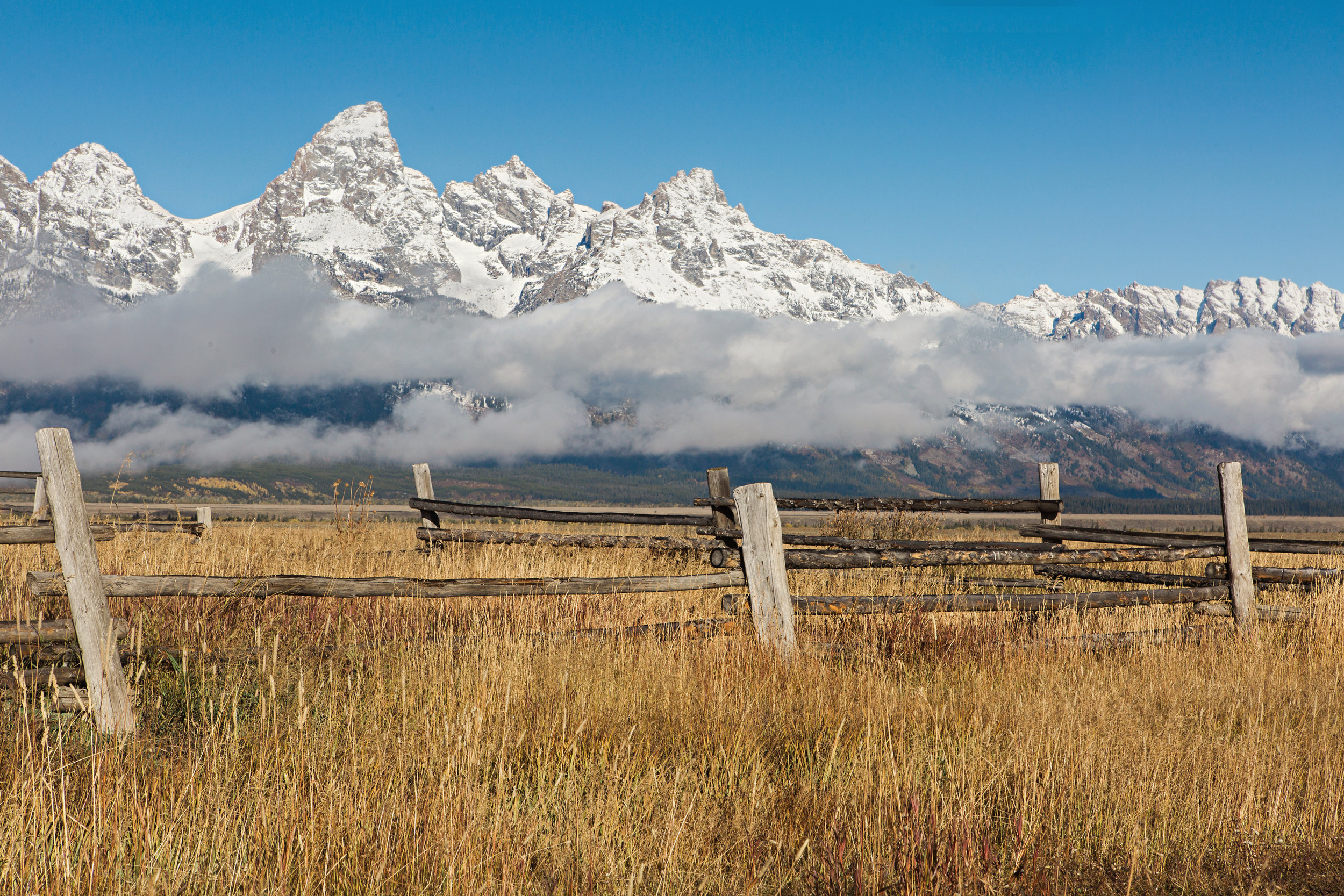 CindyGiovagnoli_Grand_Teton_National_Park_mountains_Bison_Autumn_Wyoming_Mormon_Row_aspens_fall_outdoor_photographer-021.jpg