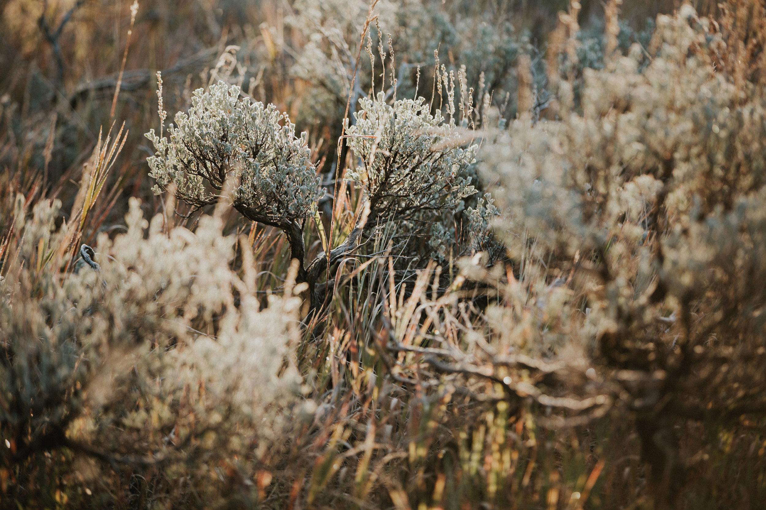CindyGiovagnoli_Grand_Teton_National_Park_mountains_Bison_Autumn_Wyoming_Mormon_Row_aspens_fall_outdoor_photographer-025.jpg