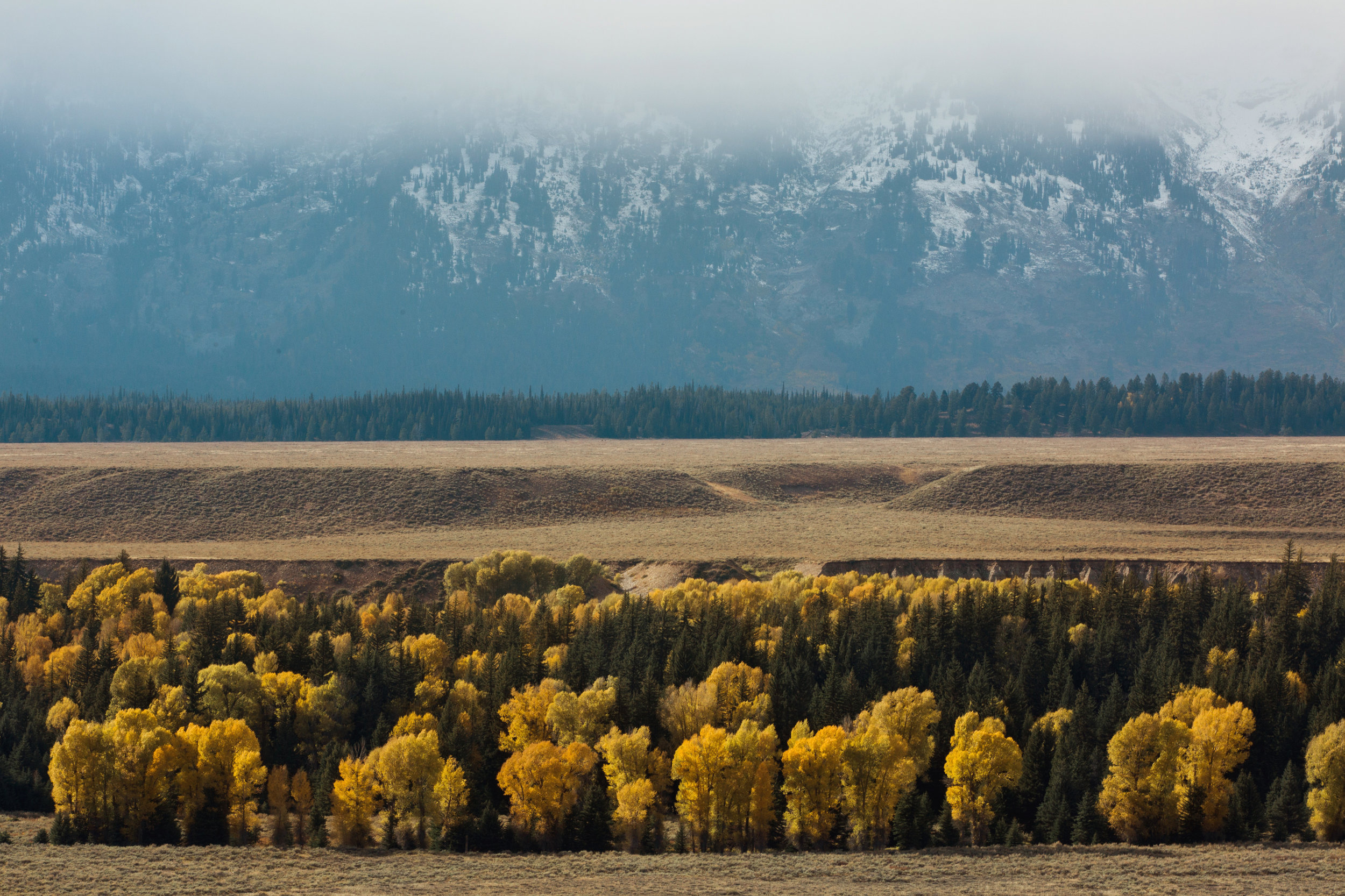 CindyGiovagnoli_Grand_Teton_National_Park_mountains_Bison_Autumn_Wyoming_Mormon_Row_aspens_fall_outdoor_photographer-027.jpg