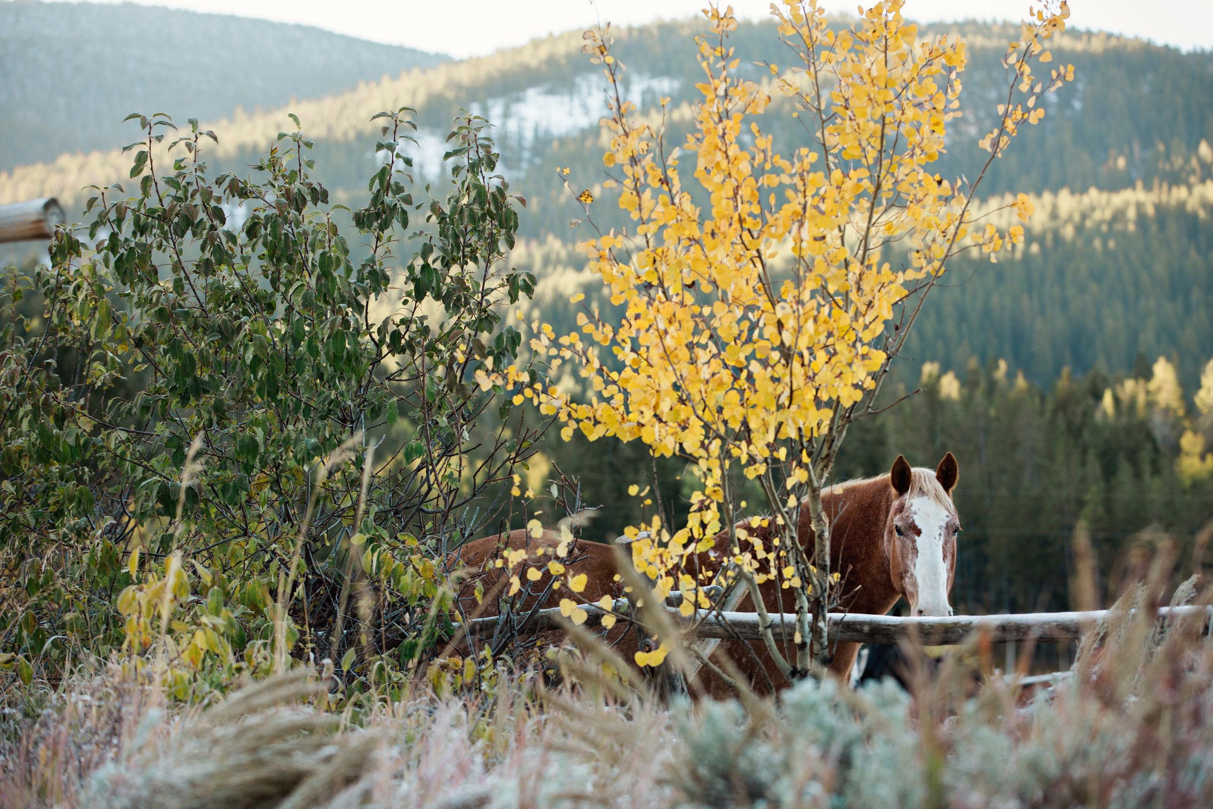 CindyGiovagnoli_Grand_Teton_National_Park_mountains_Bison_Autumn_Wyoming_Mormon_Row_aspens_fall_outdoor_photographer-028.jpg