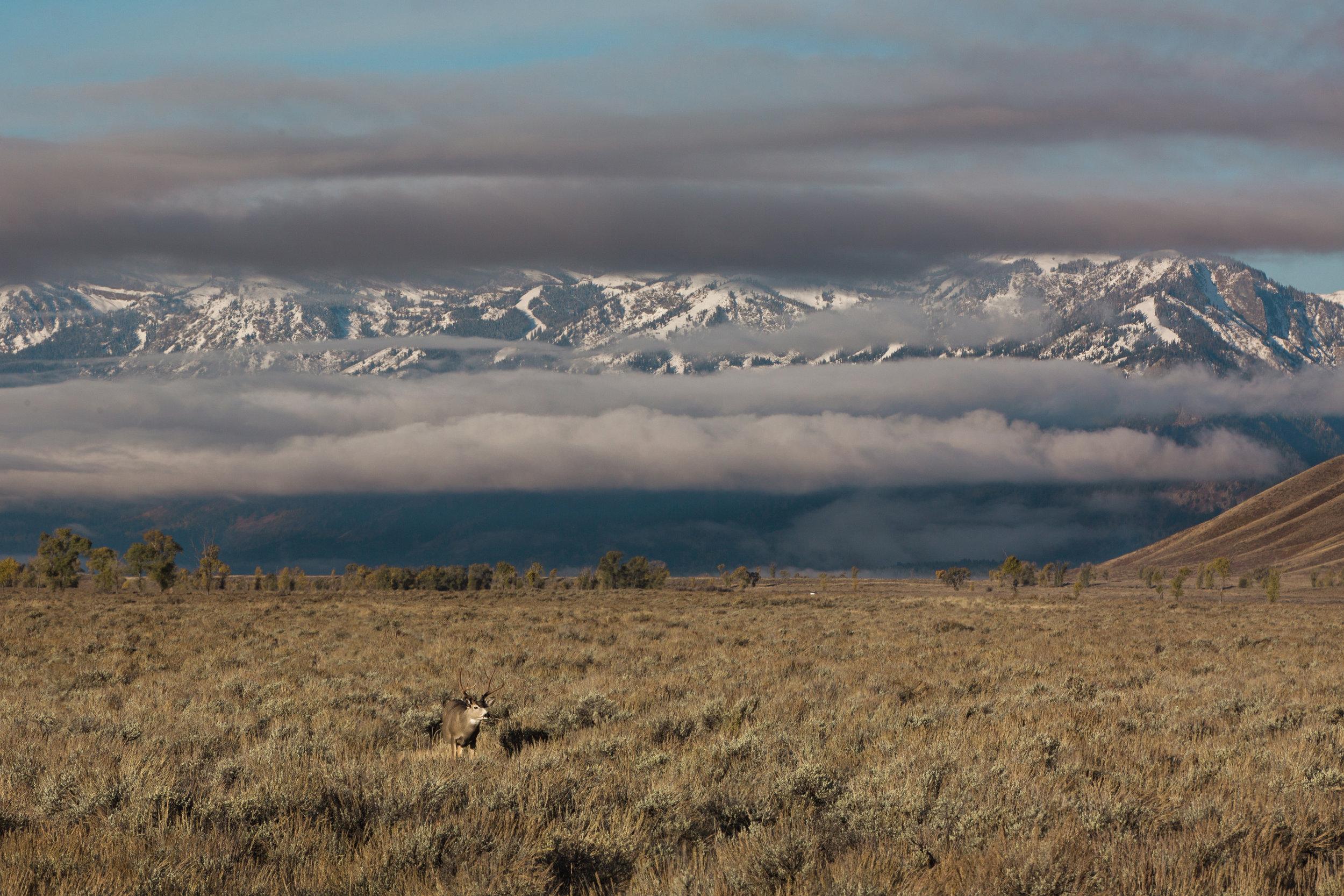 CindyGiovagnoli_Grand_Teton_National_Park_mountains_Bison_Autumn_Wyoming_Mormon_Row_aspens_fall_outdoor_photographer-030.jpg