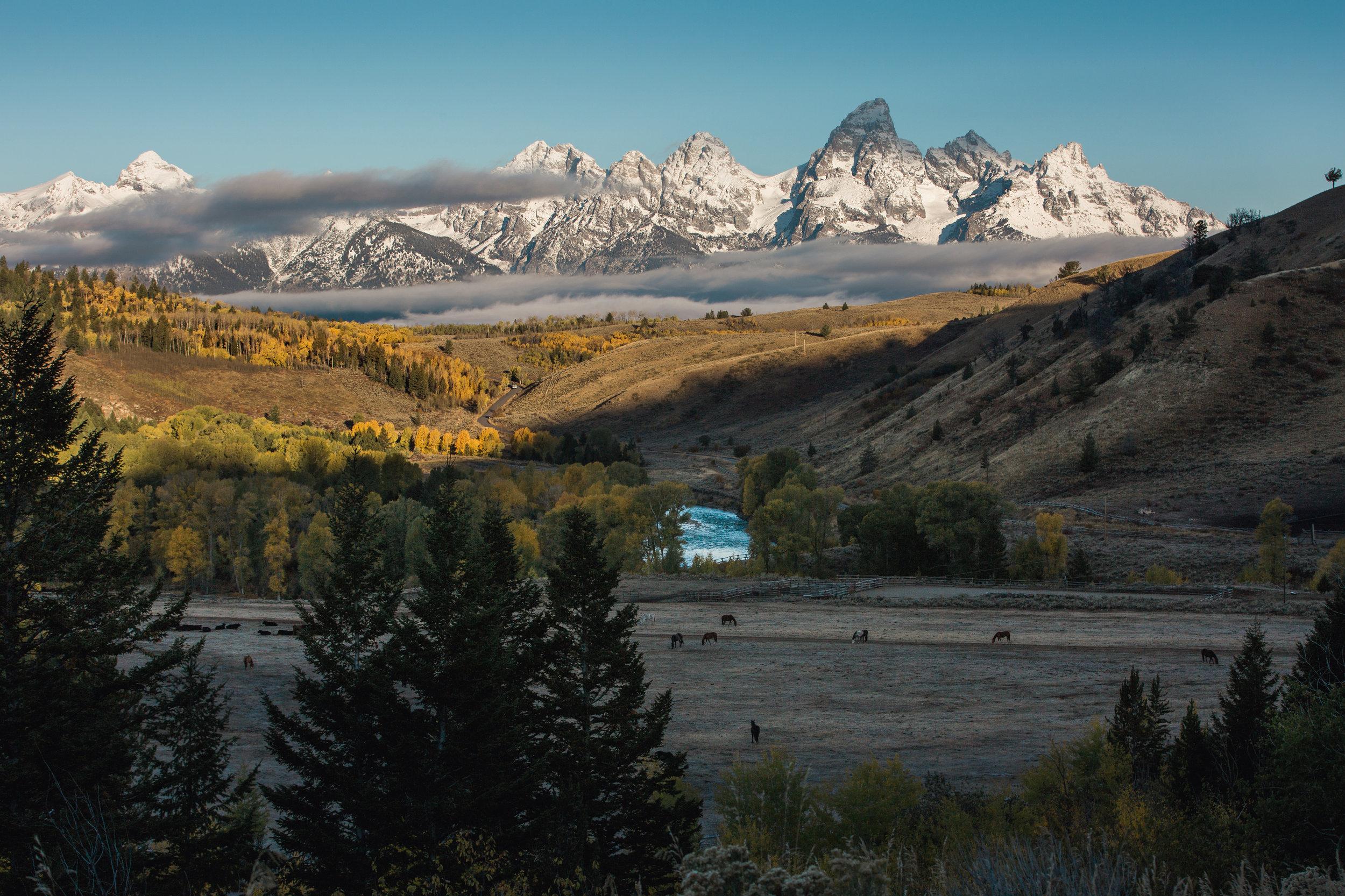 CindyGiovagnoli_Grand_Teton_National_Park_mountains_Bison_Autumn_Wyoming_Mormon_Row_aspens_fall_outdoor_photographer-033.jpg