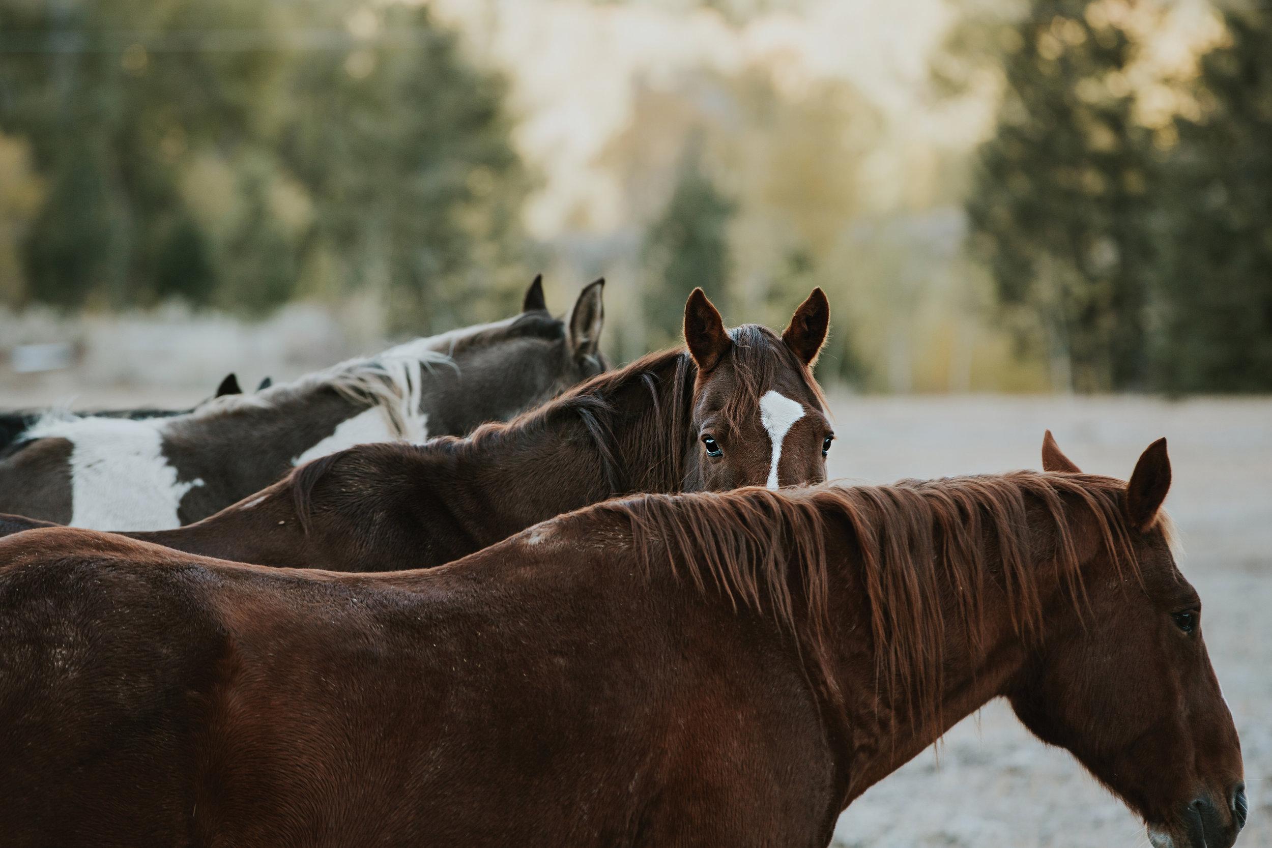 CindyGiovagnoli_Grand_Teton_National_Park_mountains_Bison_Autumn_Wyoming_Mormon_Row_aspens_fall_outdoor_photographer-035.jpg