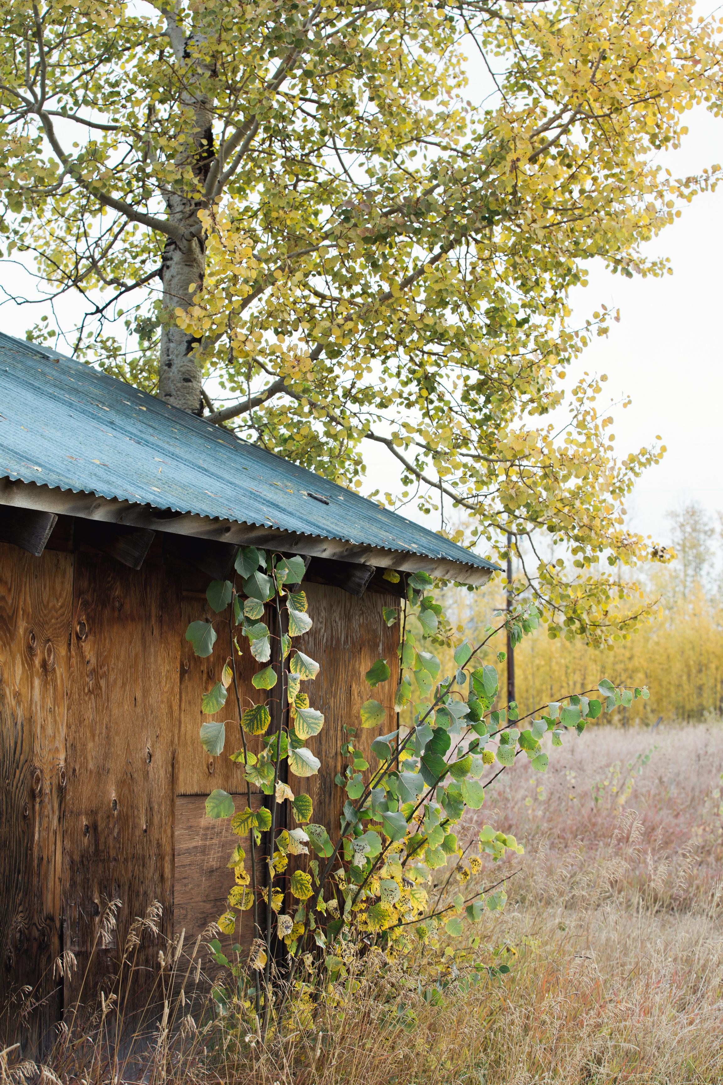 CindyGiovagnoli_Grand_Teton_National_Park_mountains_Bison_Autumn_Wyoming_Mormon_Row_aspens_fall_outdoor_photographer-036.jpg